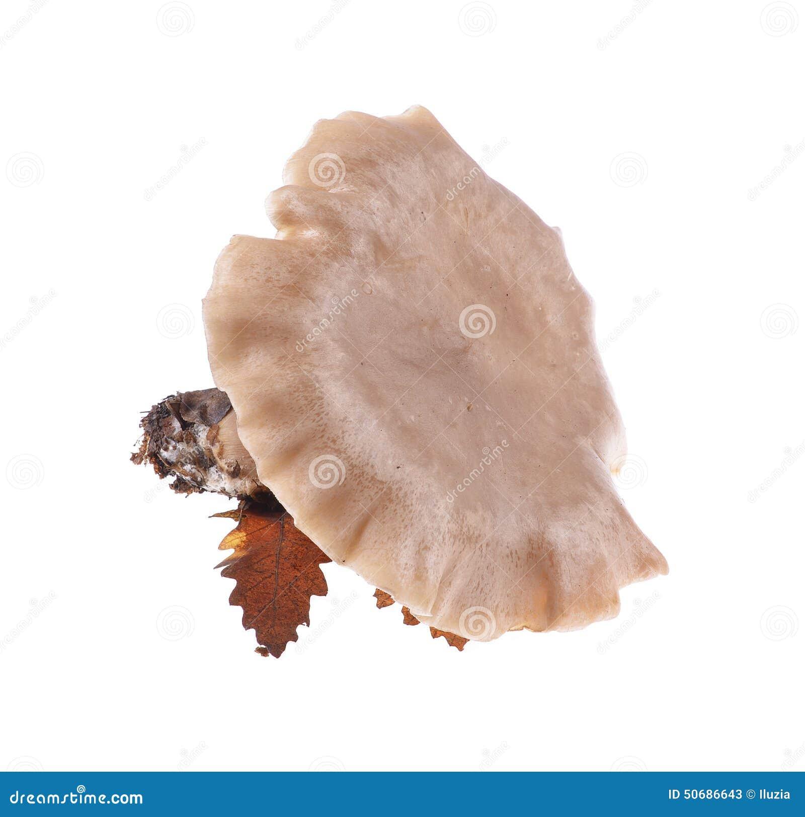 Download 蘑菇 库存图片. 图片 包括有 新鲜, 原始, beautifuler, browne, 盖帽, 夏天, 有机 - 50686643