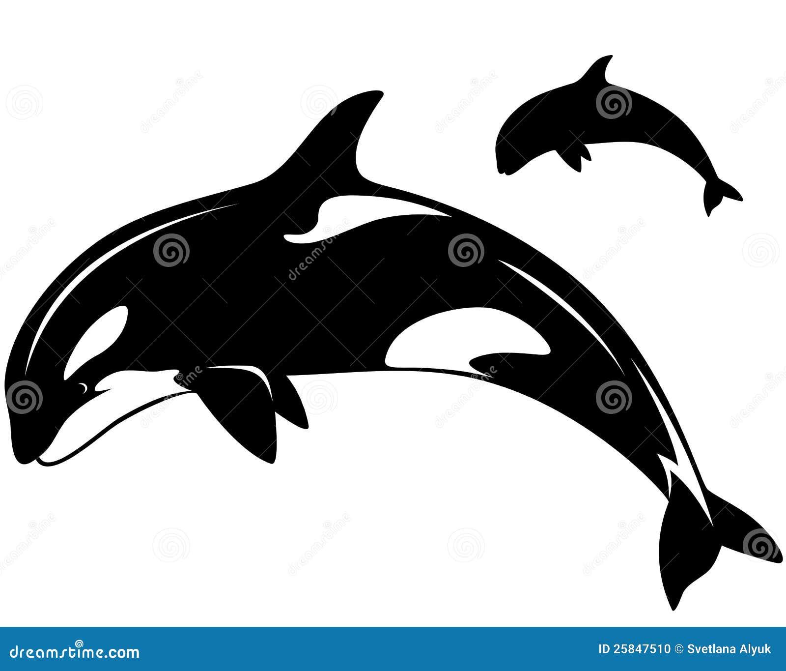 虎鲸 向量例证 插画 包括有 例证 设计 哺乳动物 凶手 敌意 夹子 海运 抽象 和平