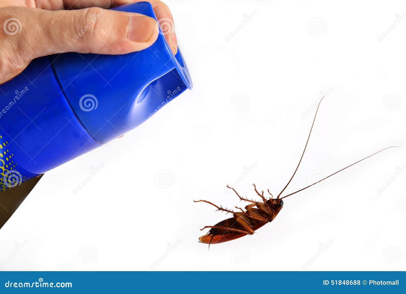 虫驱除剂和死的蟑螂