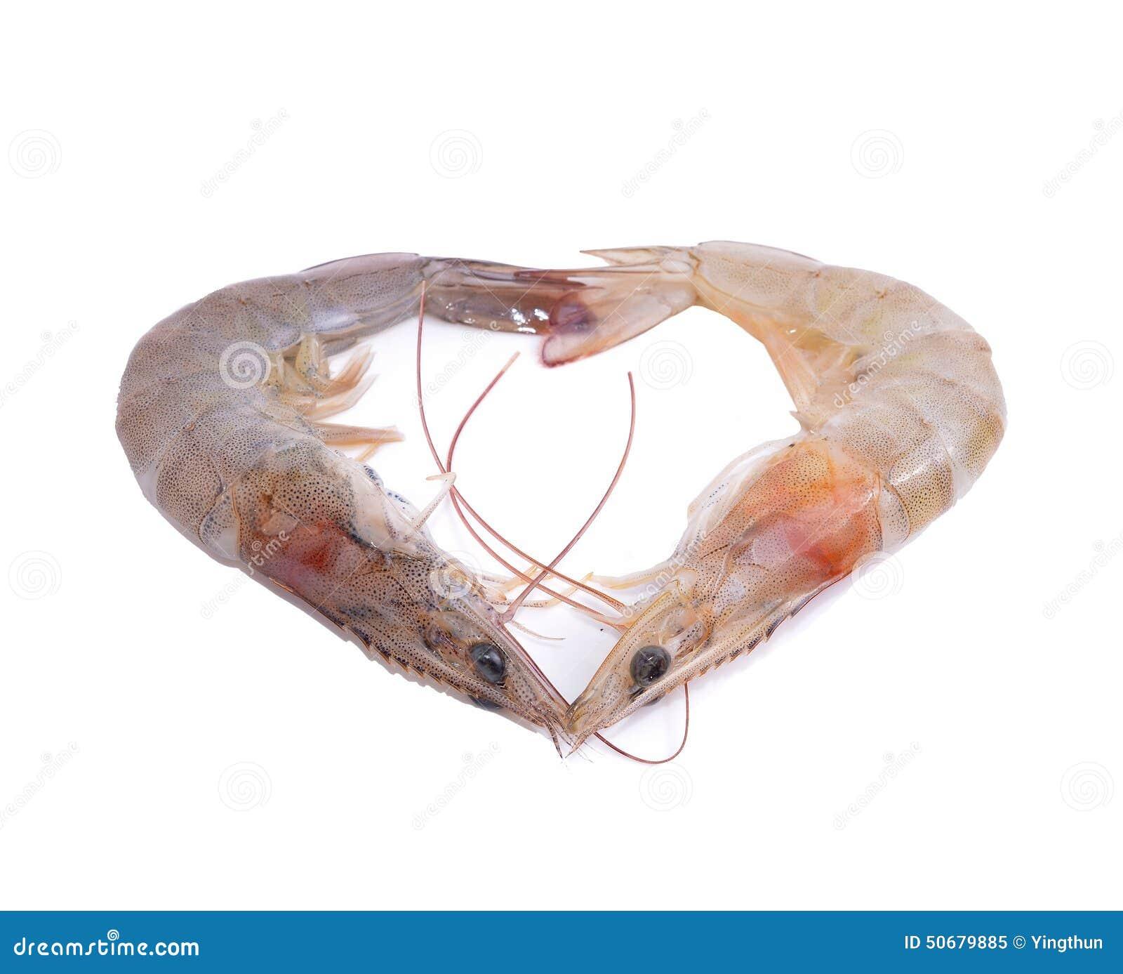Download 虾有白色背景 库存图片. 图片 包括有 甲壳动物, 敌意, 空白, 自然, 重点, 可口, 大虾, 海运 - 50679885