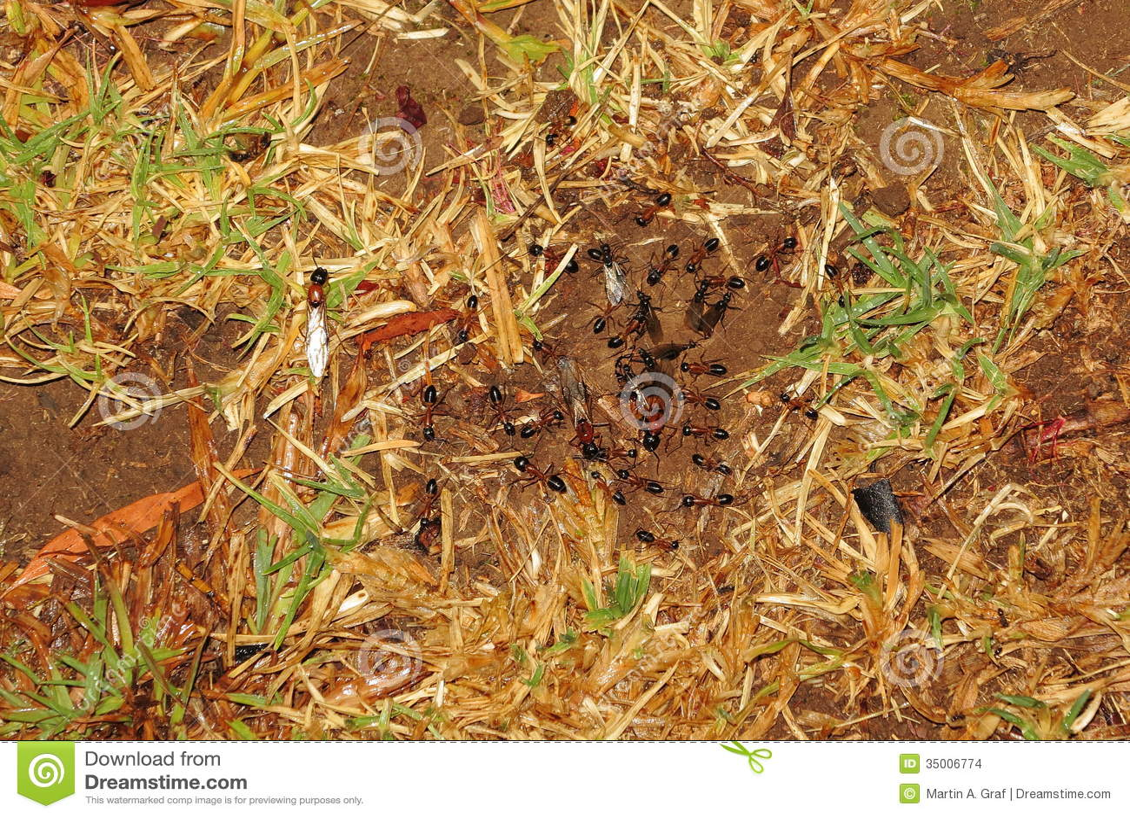 蚂蚁婚礼的飞行