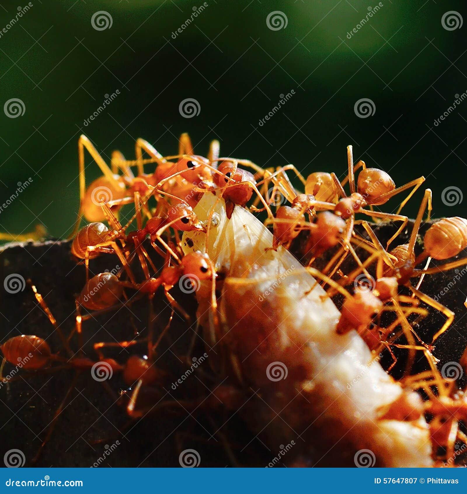 蚂蚁搬入一些蚂蚁性情的巢.哪种食物蜥蜴温顺图片