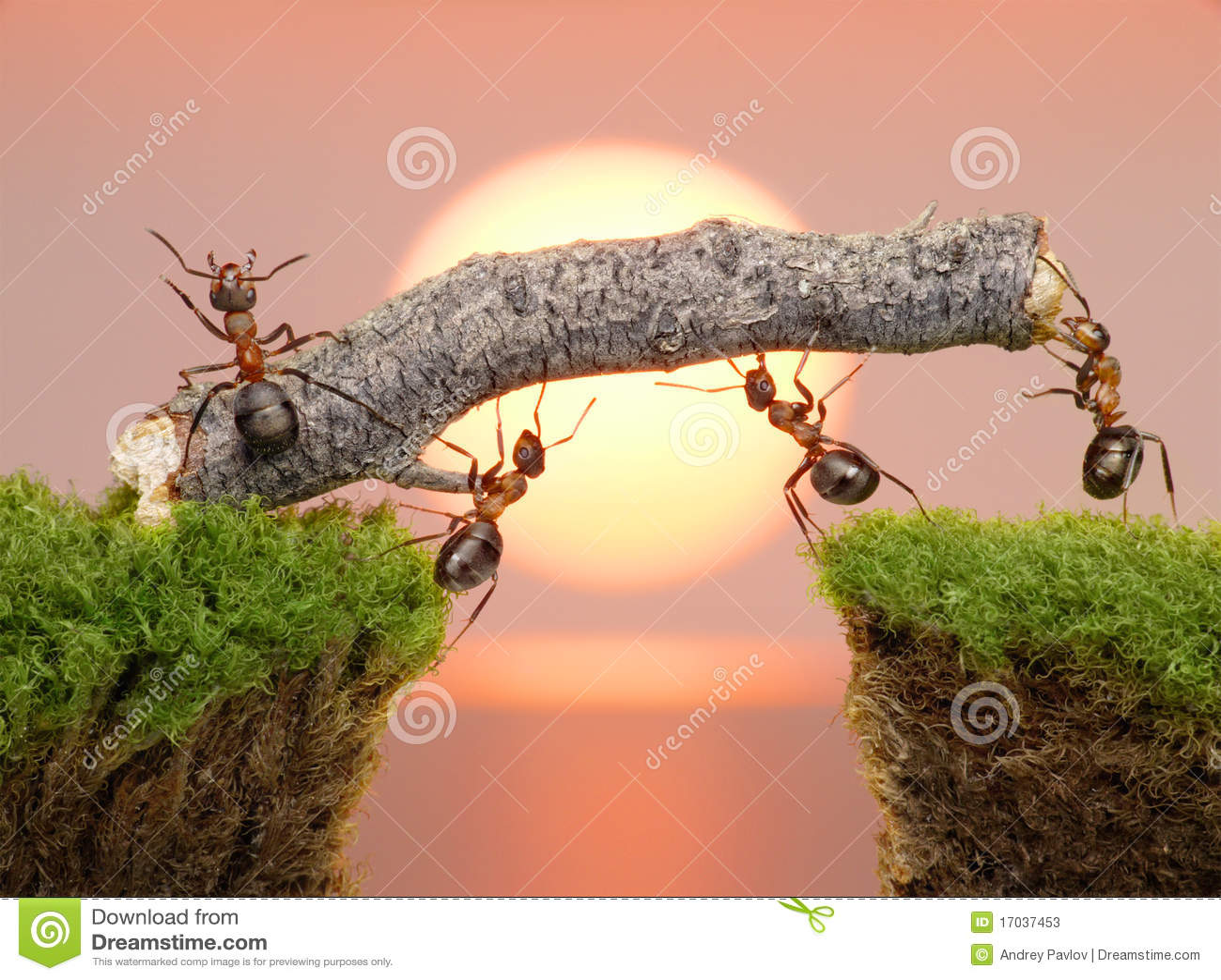 蚂蚁跨接修建小组联合工作