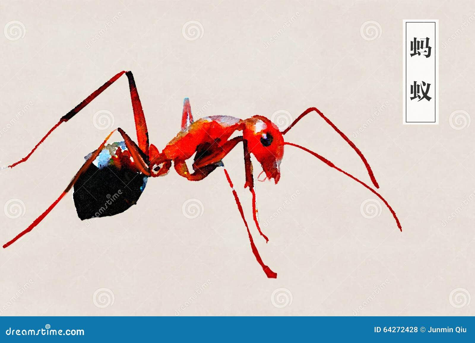 蚂蚁,昆虫,努力,一起,天线,火蚂蚁,咬住,水彩,绘,绘,艺术,设计图片