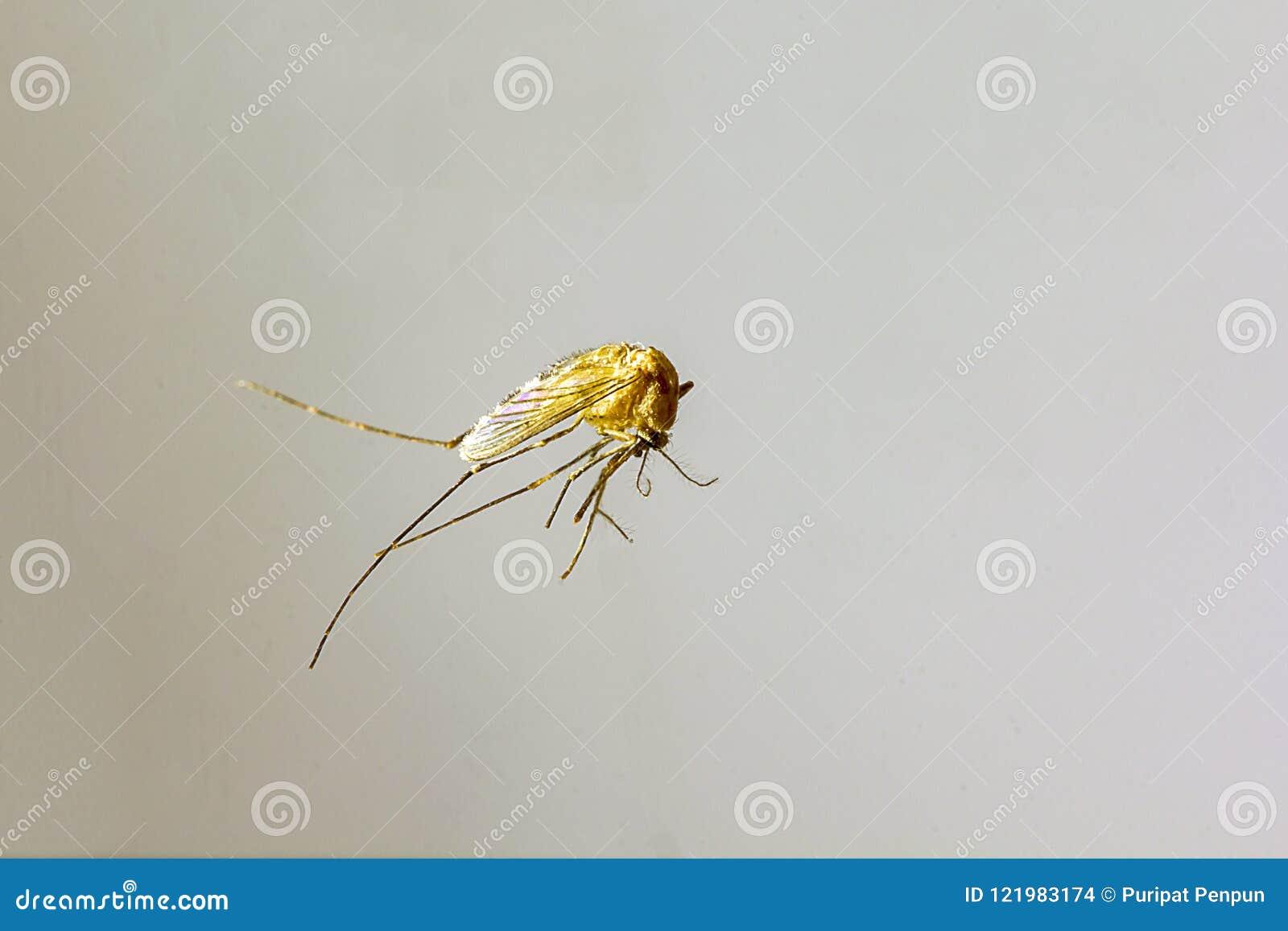 蚊子在大小上是小的