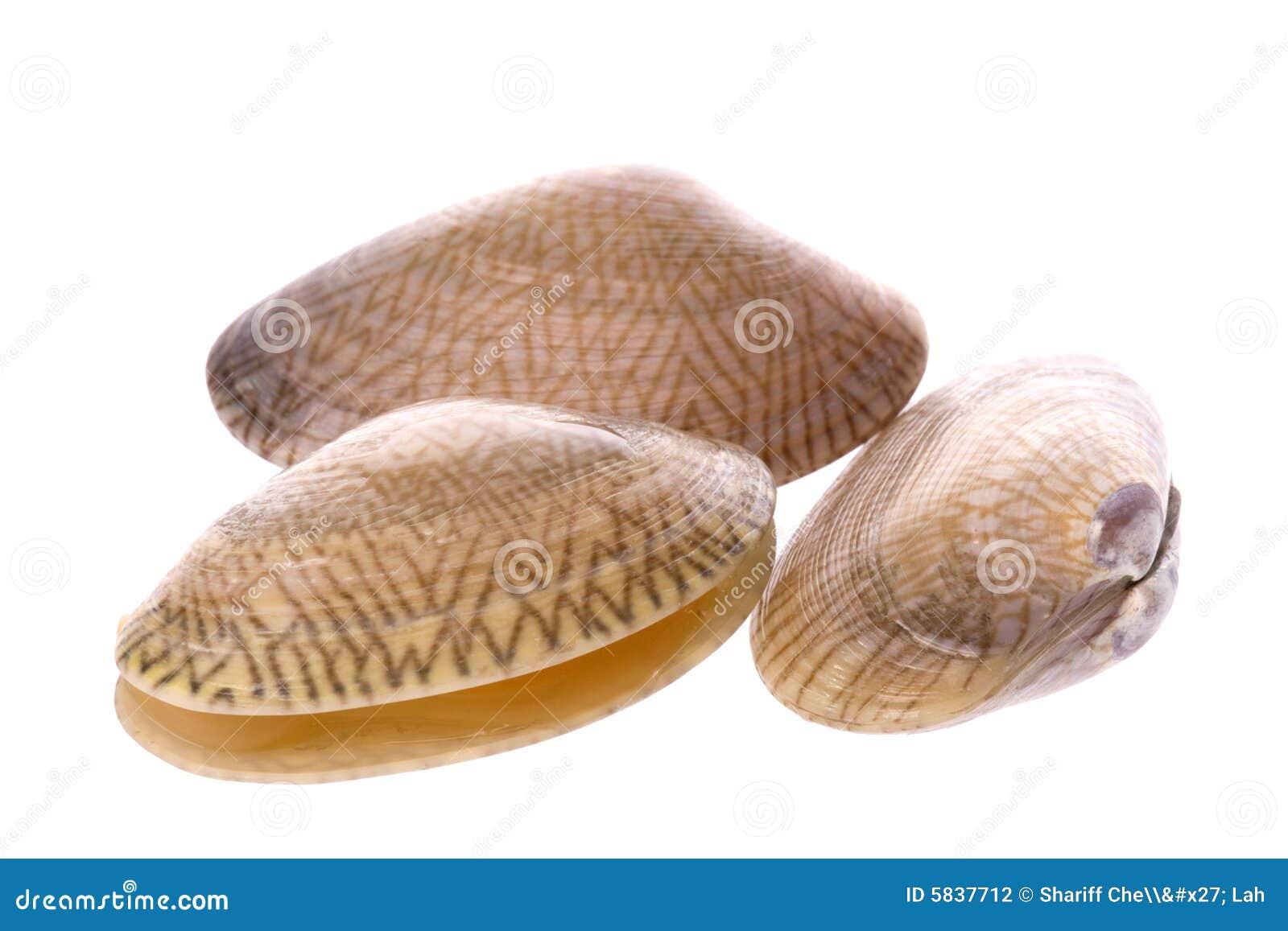 蛤蜊可食的活宏指令