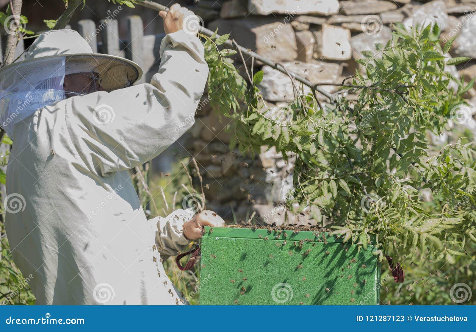 蜂农与群蜂- apis mellifera一起使用