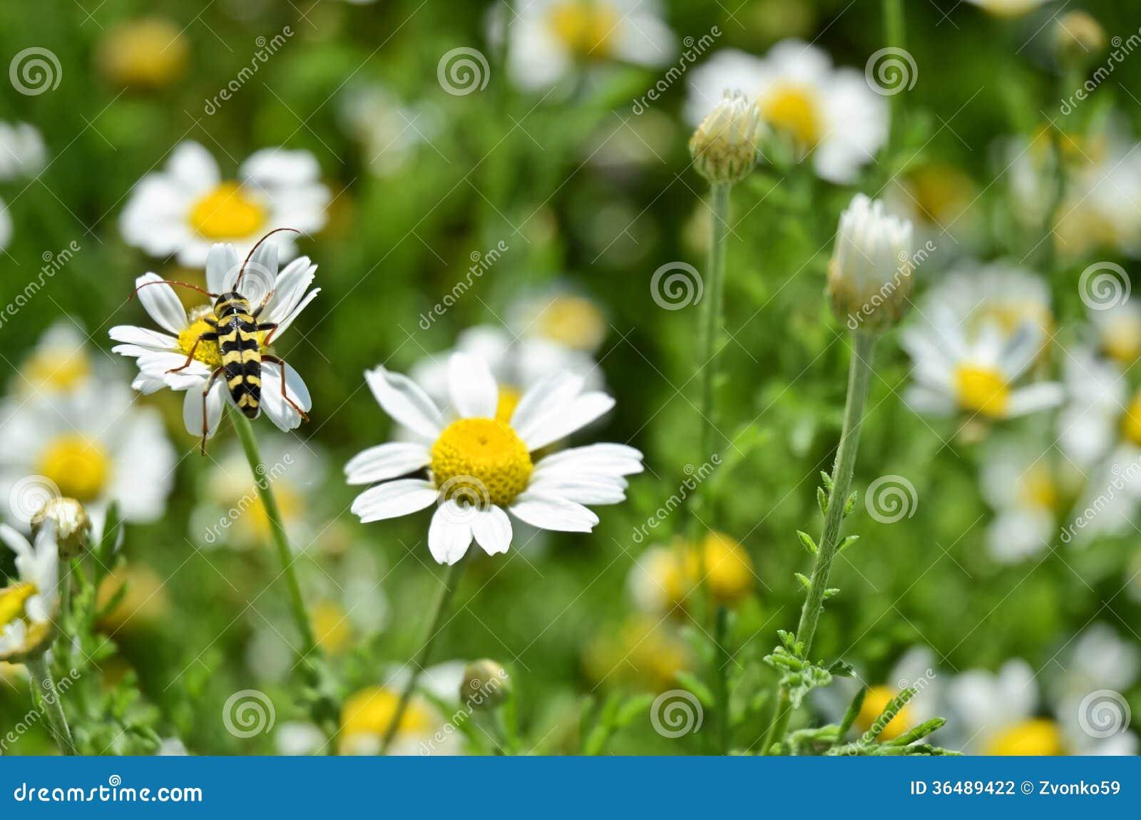 黄蜂在工作