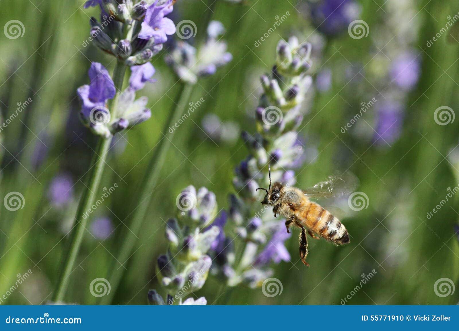 蜂在庭院里