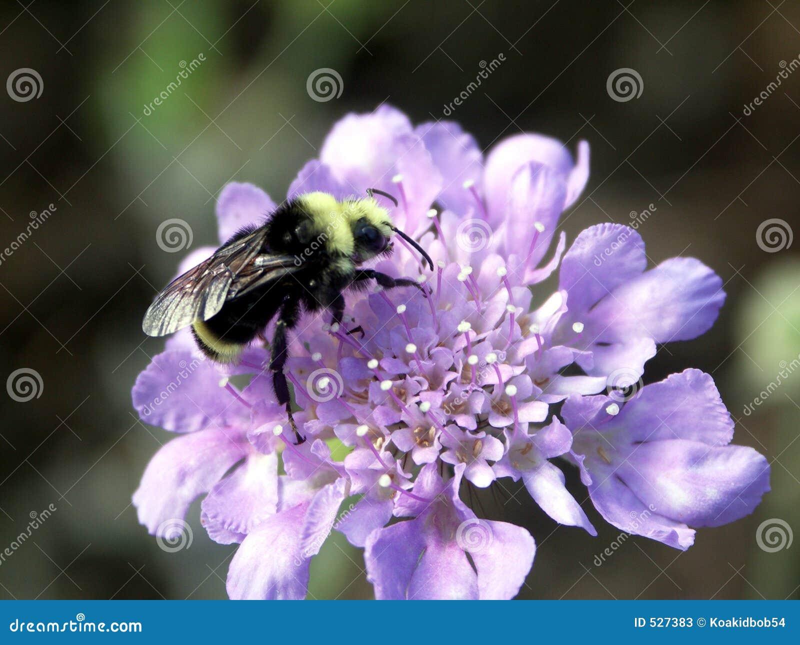 Download 蜂弄糟 库存图片. 图片 包括有 的根底, 昆虫, 土蜂, 春天, 夏天, 弄脏之前, 寻呼机, 种田, 蜂蜜 - 527383