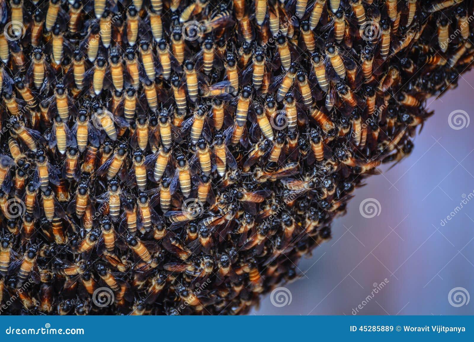 蜜蜂蜂群蜂巢蜂蜜蜜怎么吃图片