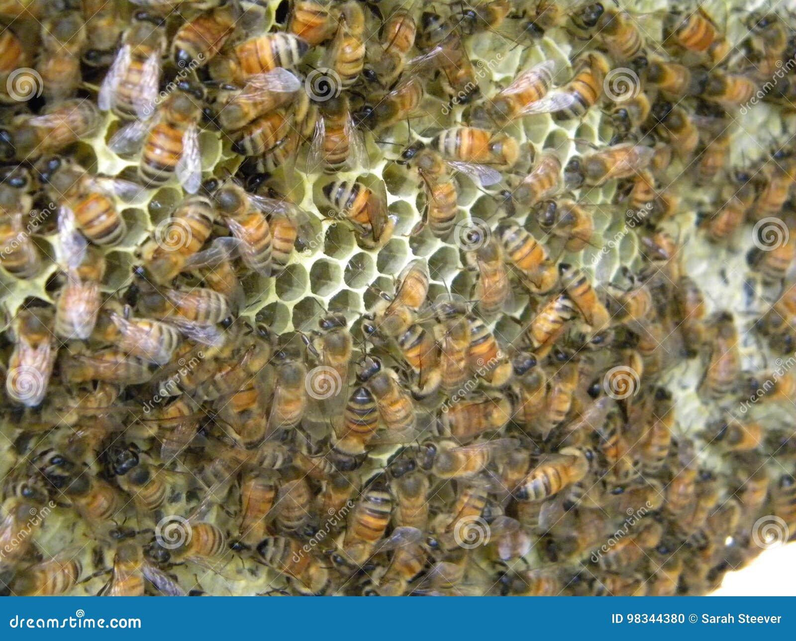 蜂蜜蜂运送花蜜