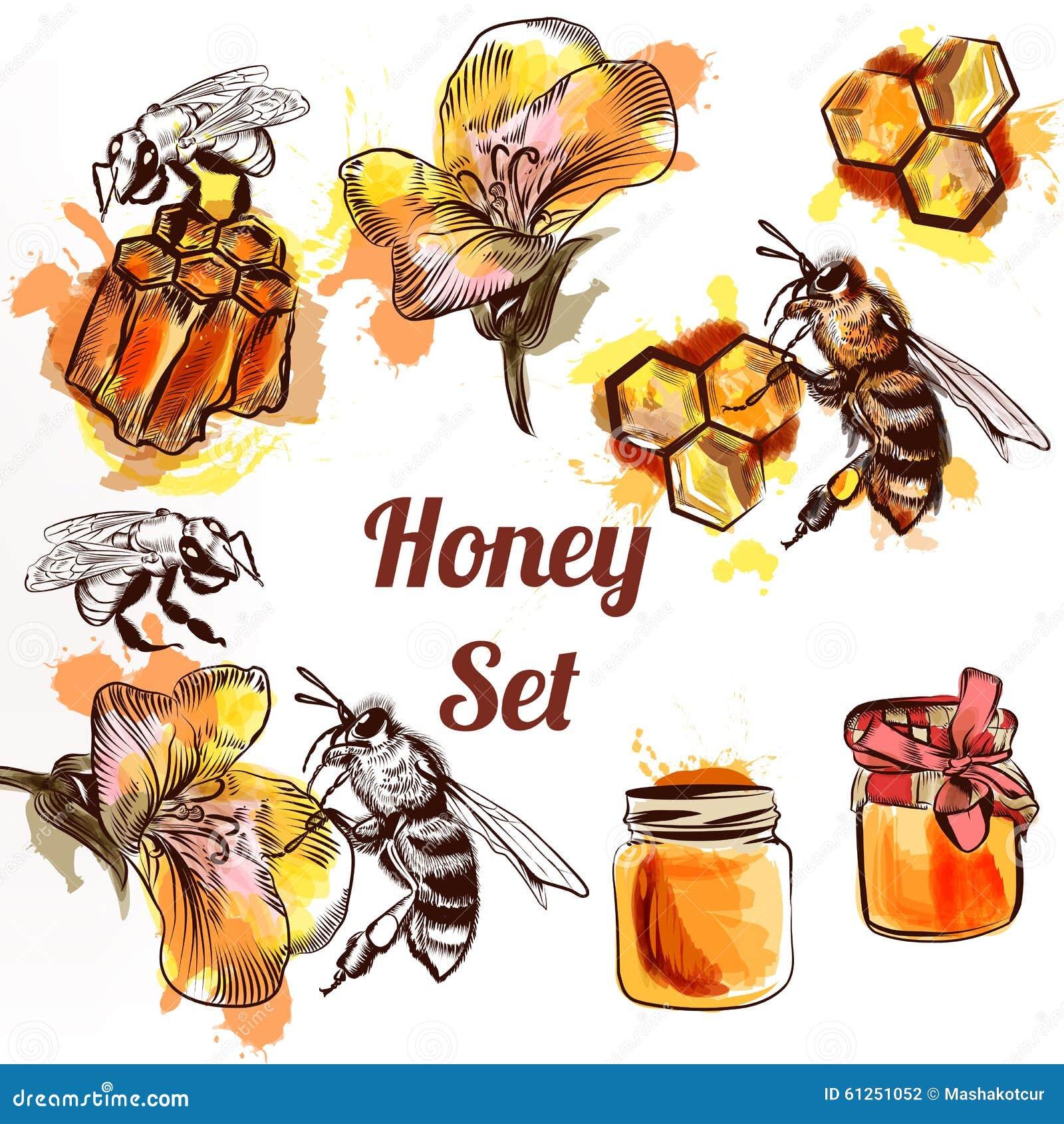 蜂蜜集合或汇集在waterco的元素蜂梳子和蜂蜜