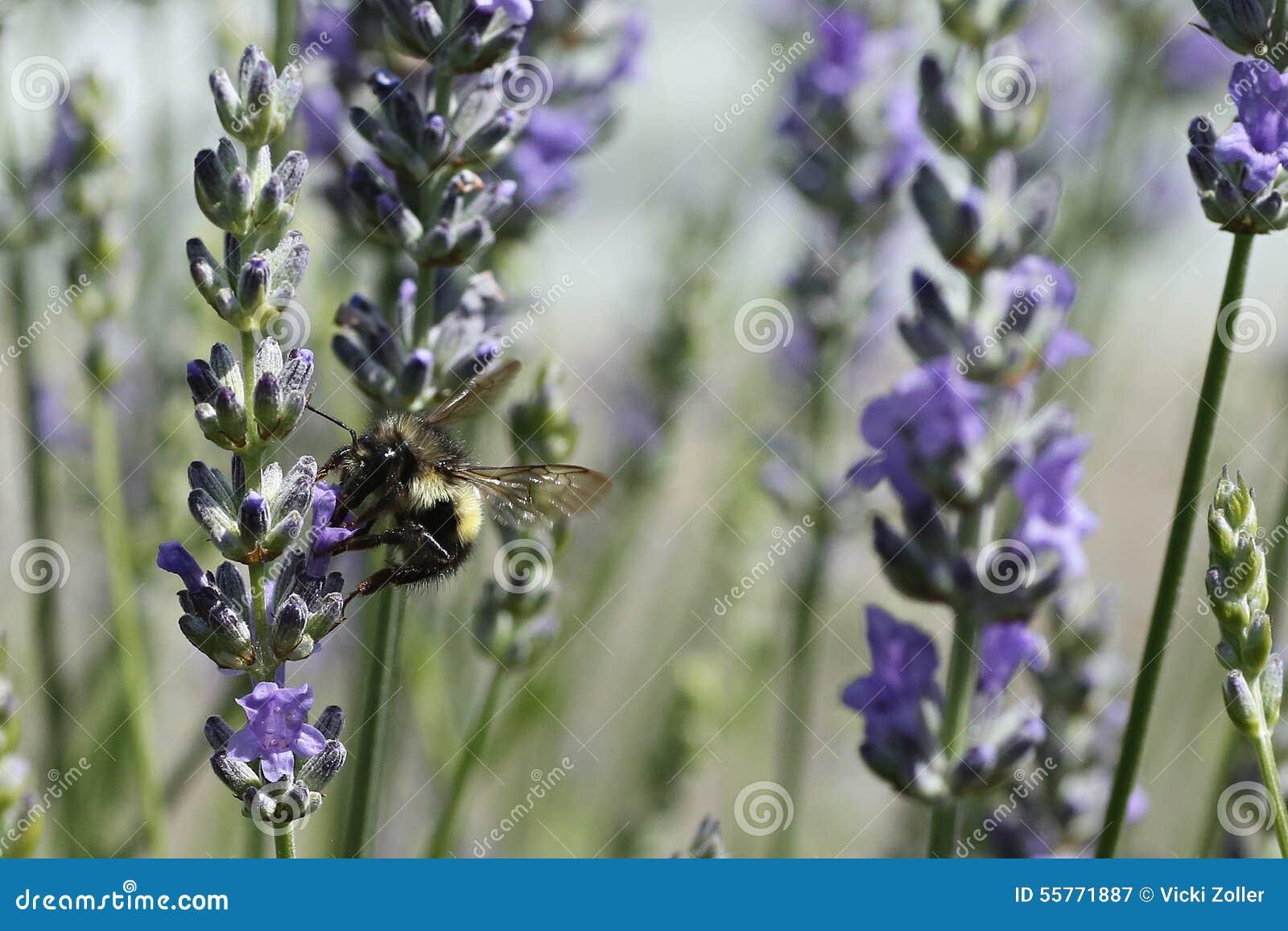 蜂详述蜂蜜查出的宏指令被堆积的非常白色