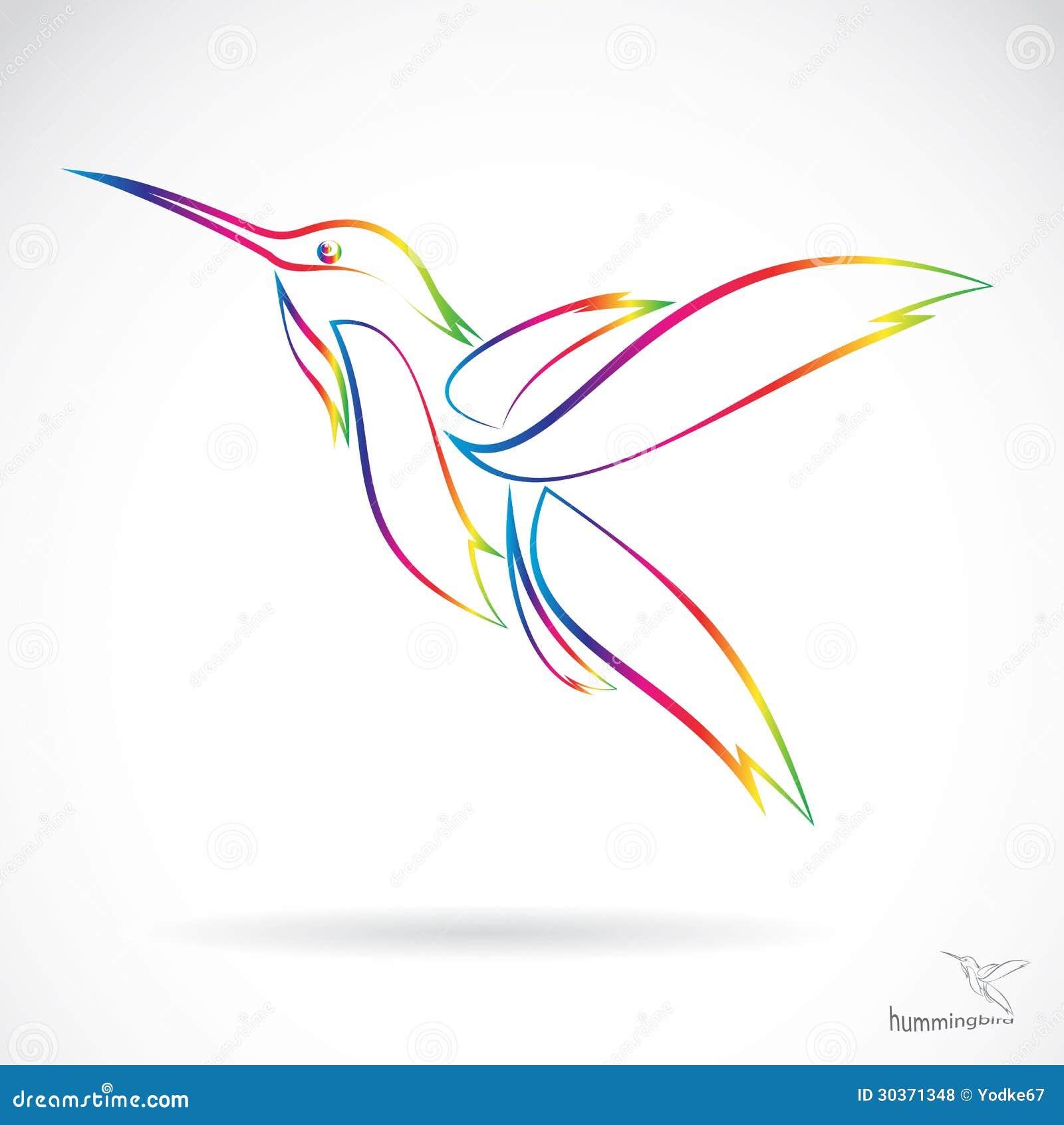 导航一只蜂鸟的图象在白色背景的.