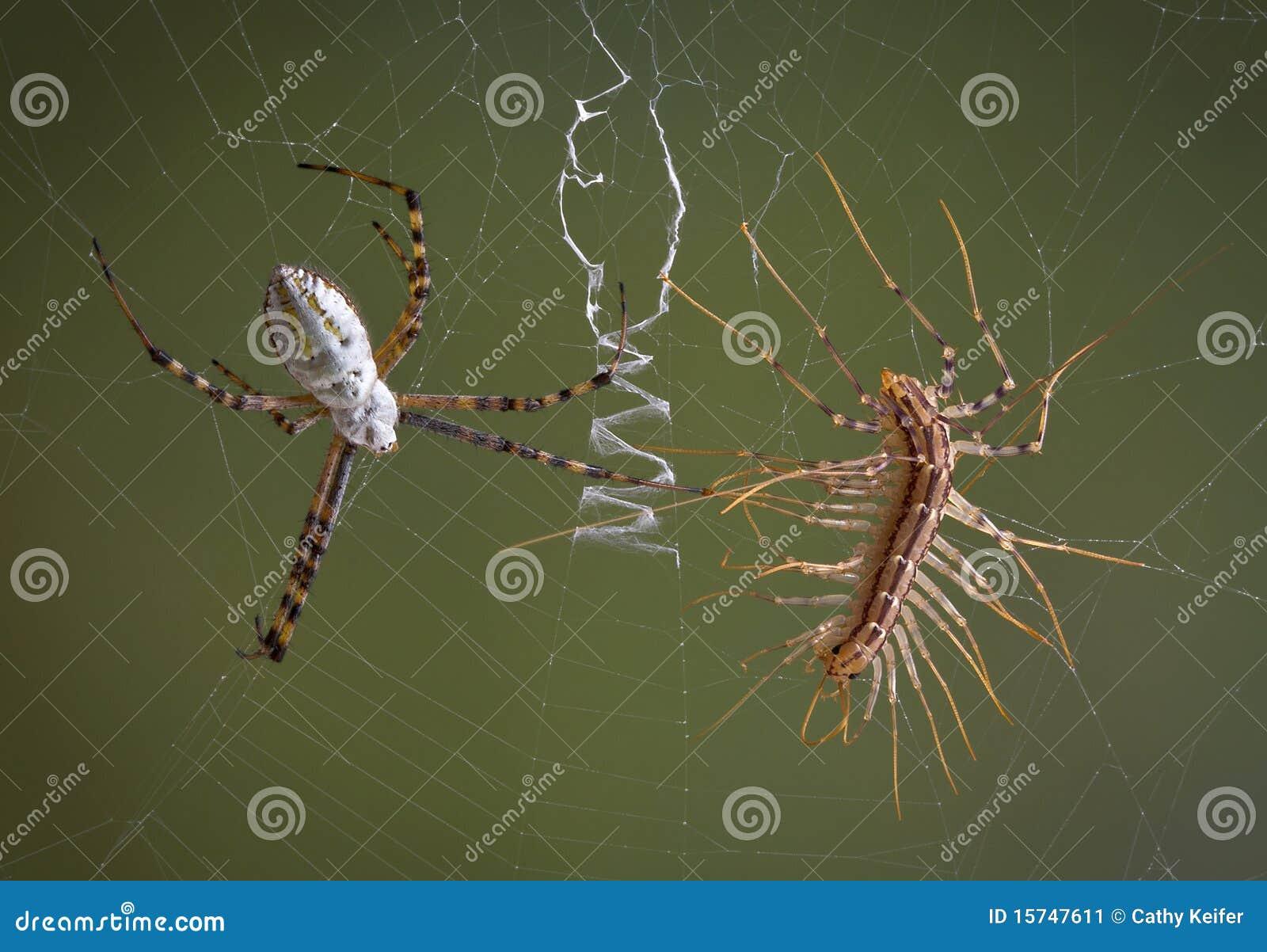 蜈蚣蜘蛛与