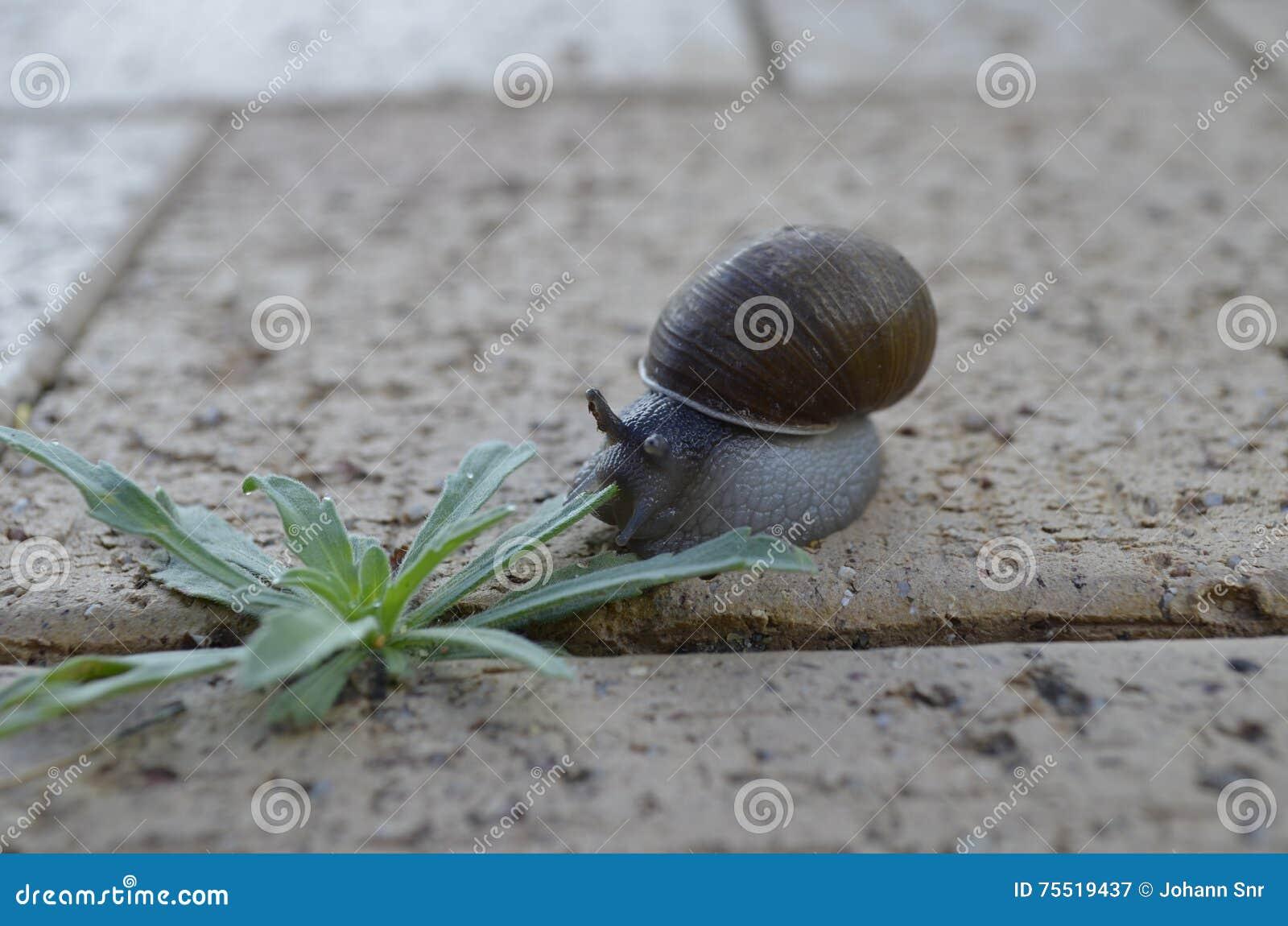 蜗牛和杂草在边路