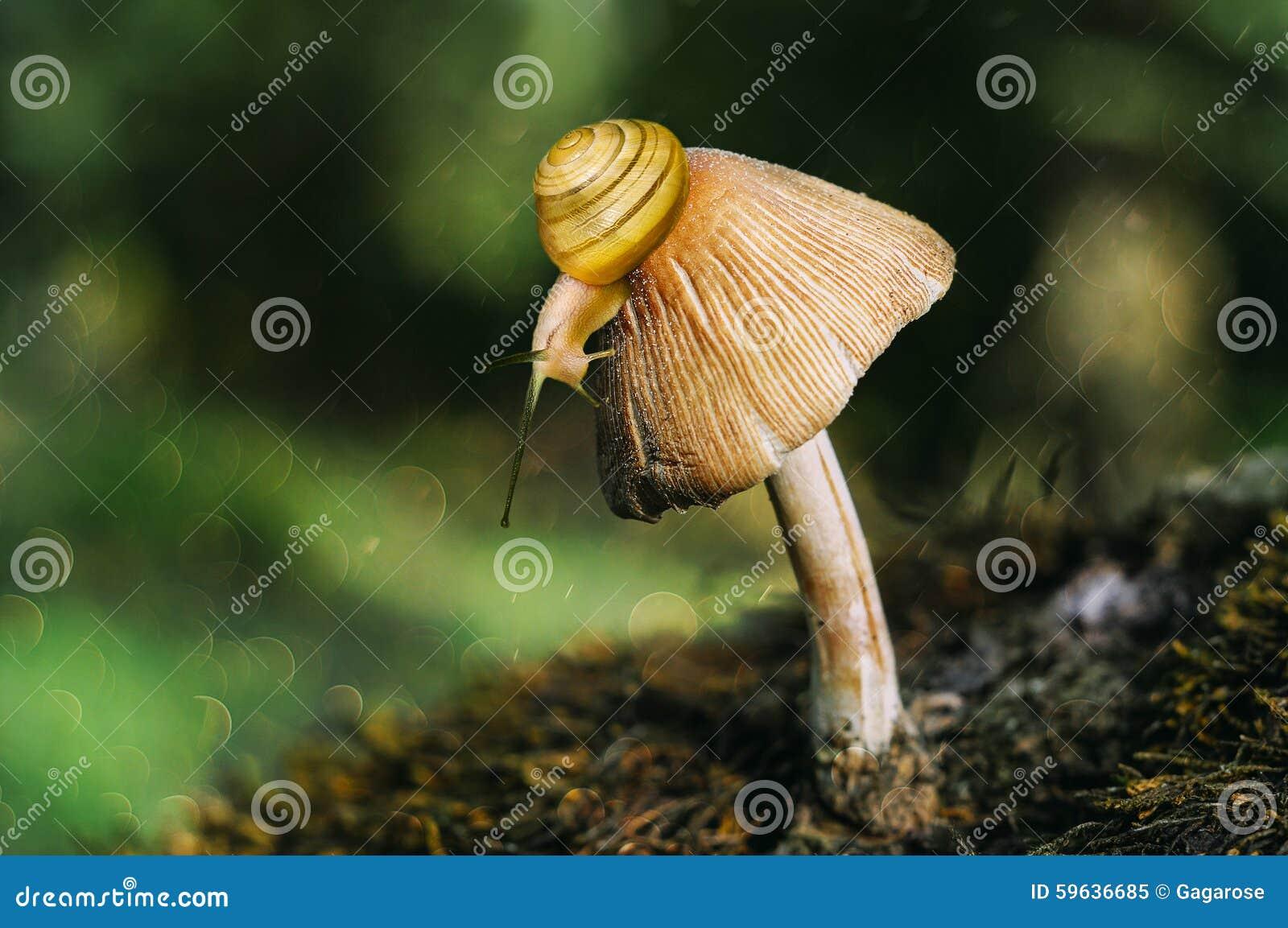 蜗牛和蘑菇
