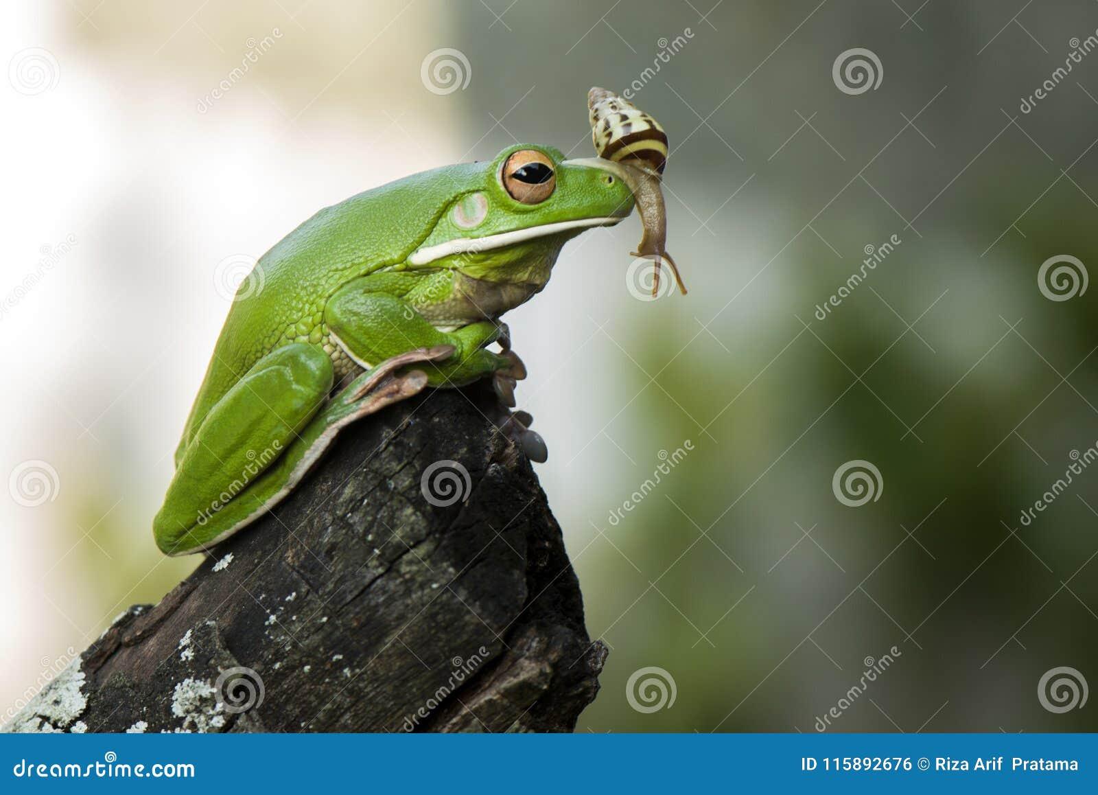 蜗牛和青蛙