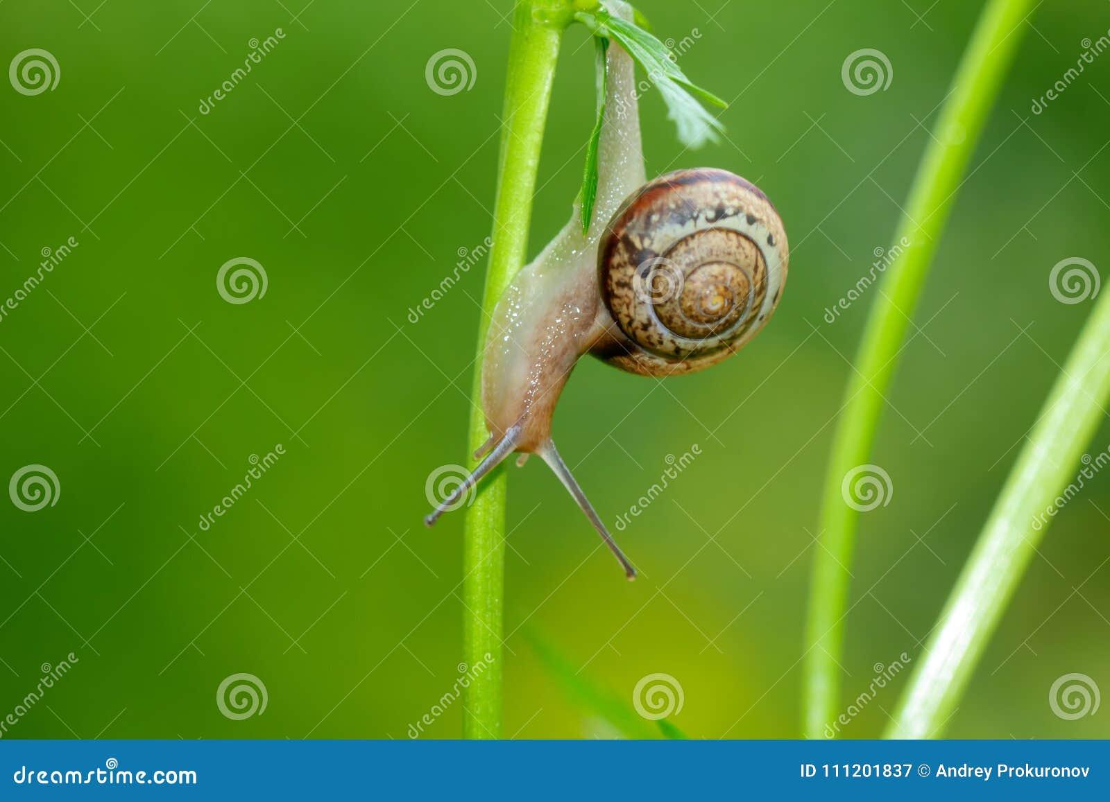 蜗牛 夏天花