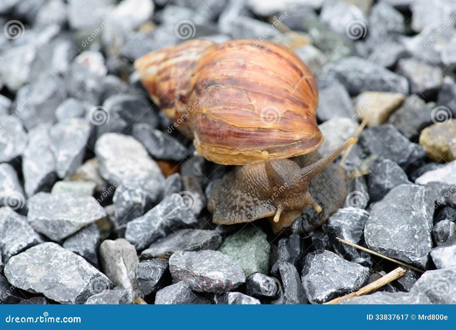蚂蚁是蜗牛谋生跟随并且润湿你的喜欢地面.动物金服睢宁图片