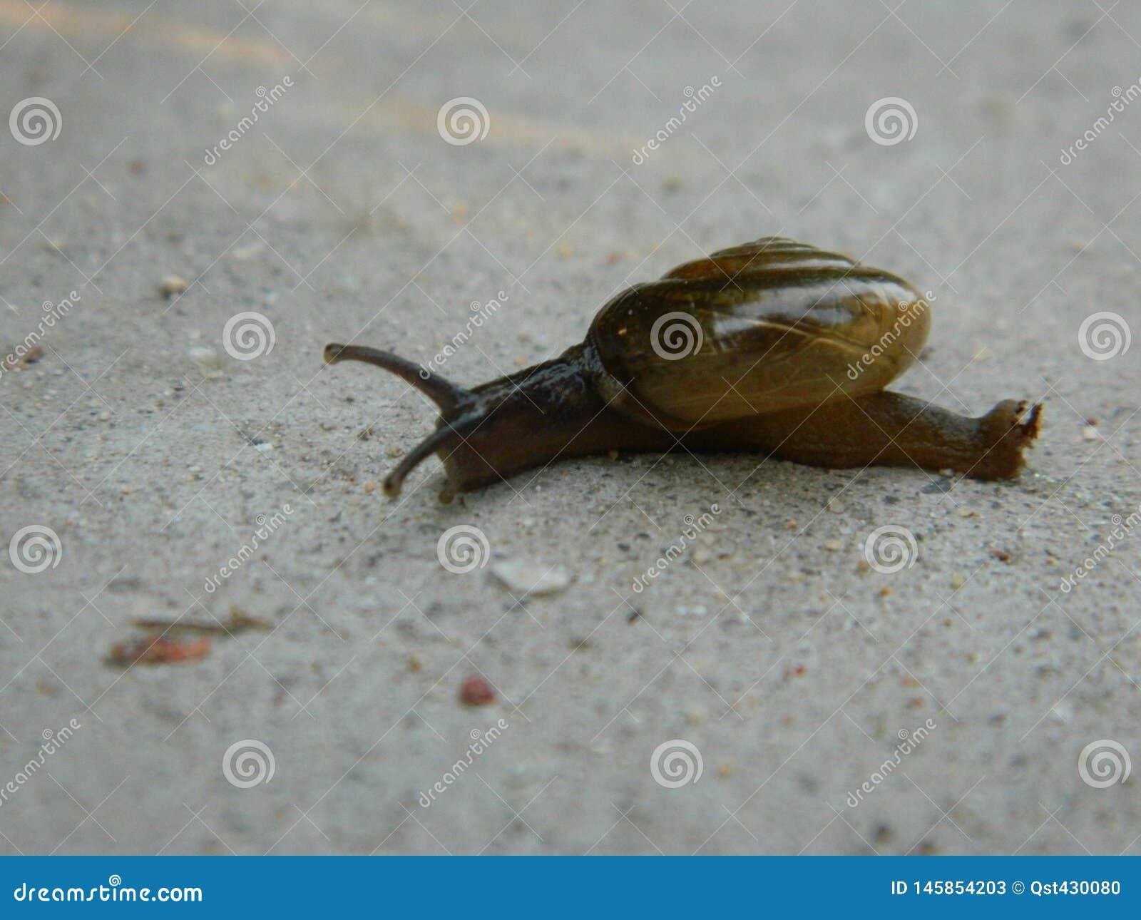 A snail crawling slowly