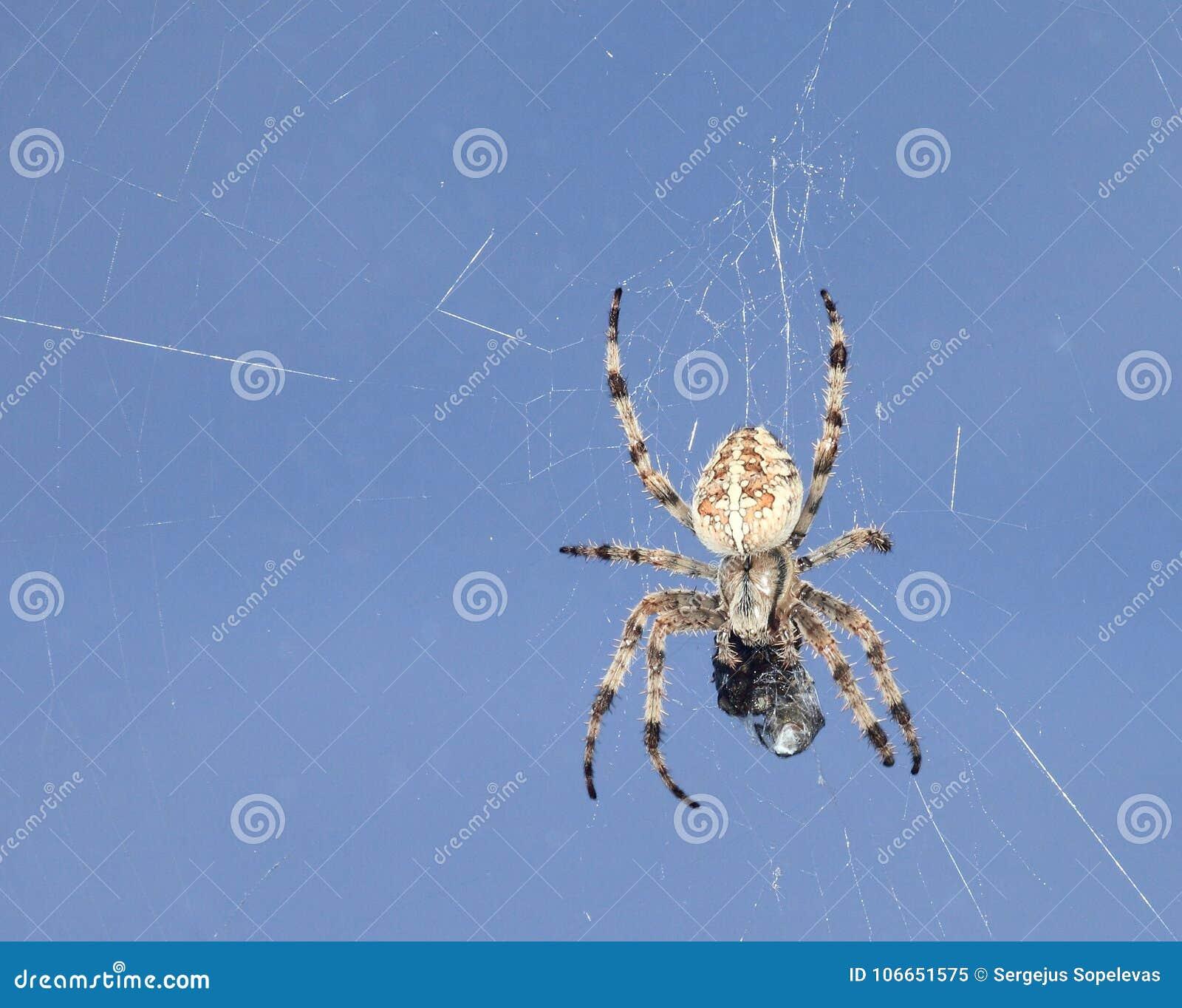蜘蛛和受害者