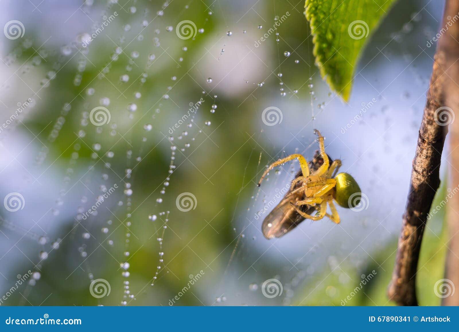 蜘蛛网宏指令