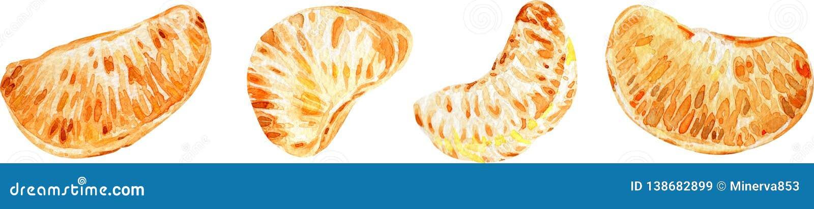 蜜桔切片 背景柑橘水果查出白色 额嘴装饰飞行例证图象其纸部分燕子水彩