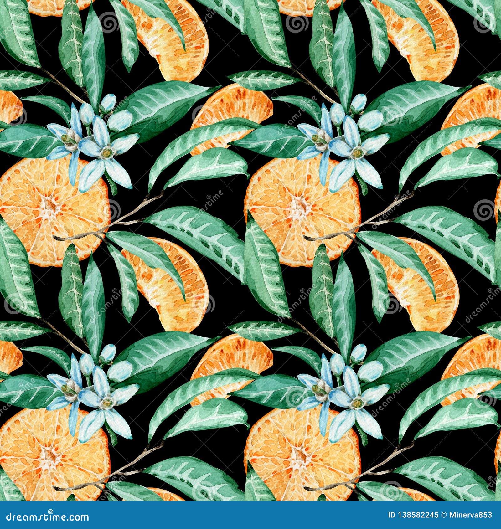 蜜桔无缝的样式 橙色裁减、花和叶子 在黑背景隔绝的水彩例证