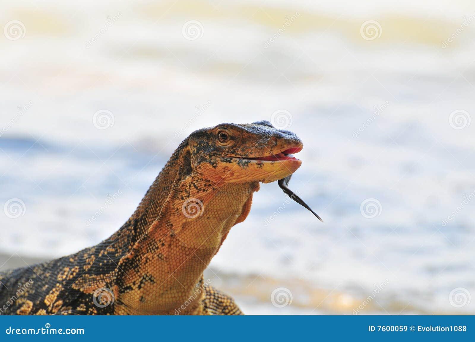 蜥蜴监控程序