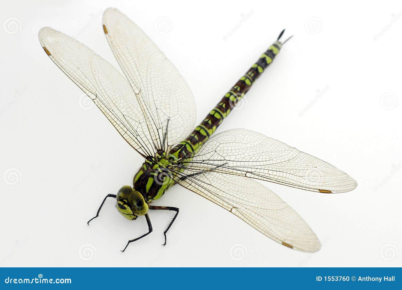 蜻蜓绿色白色