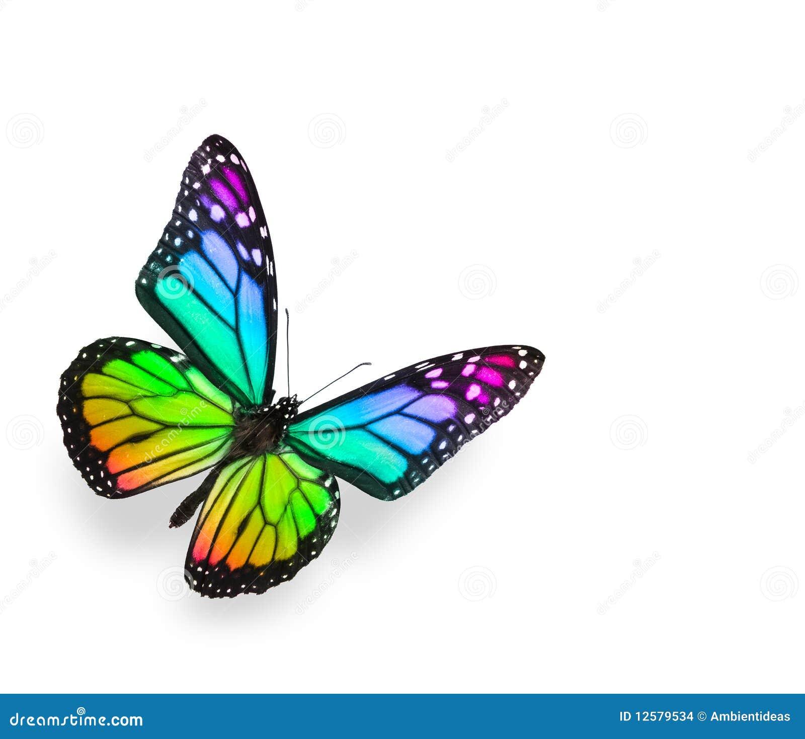 蝴蝶查出彩虹白色