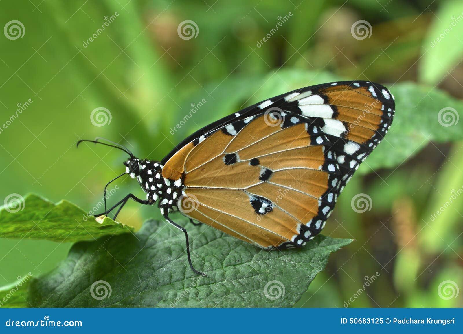 Download 蝴蝶 库存图片. 图片 包括有 模式, 绿色, 唯一, 的百威, 敌意, 蝴蝶, 中风, 五颜六色, 公园 - 50683125