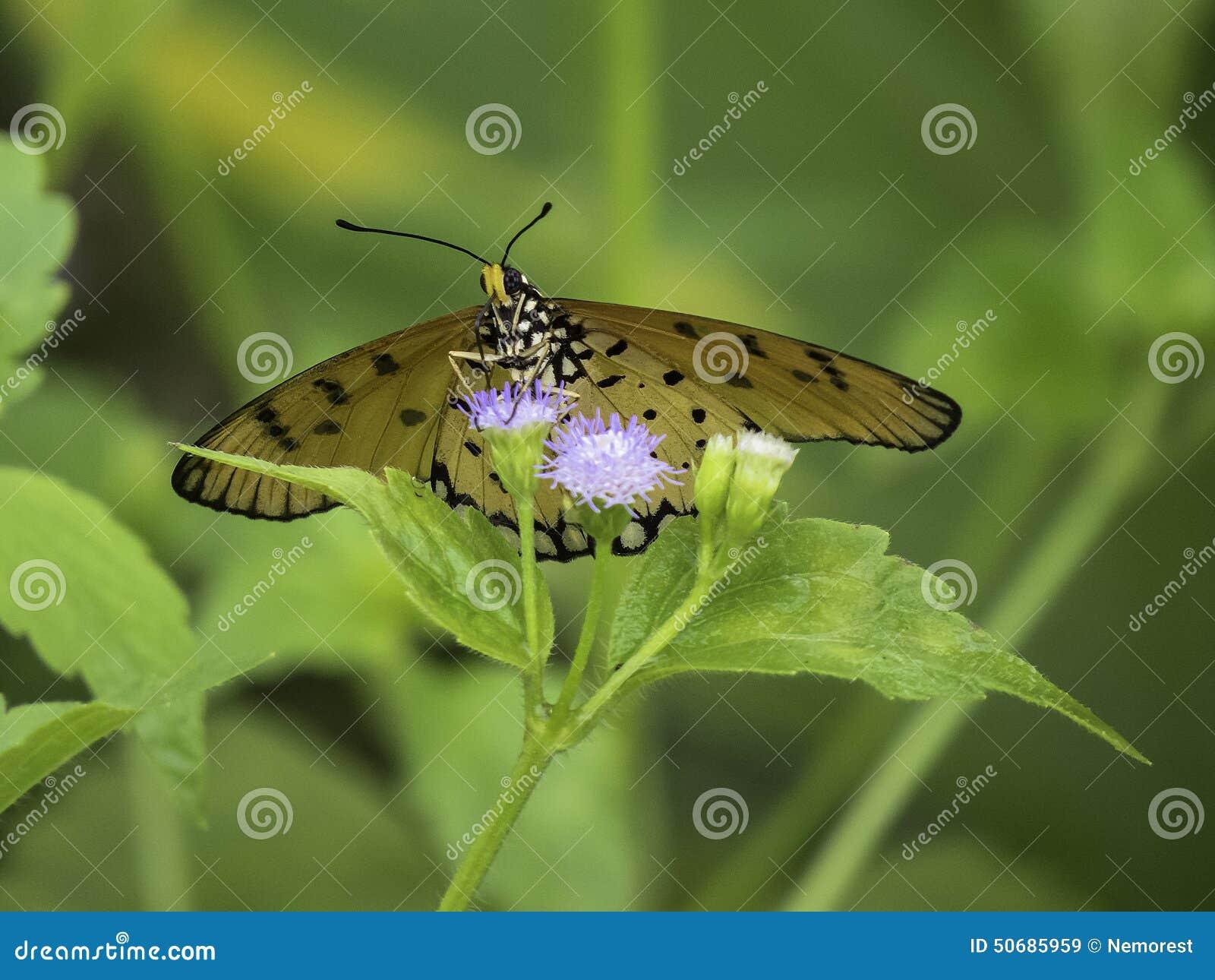 Download 蝴蝶 库存图片. 图片 包括有 热带, 扩大化, 蝴蝶, 宏指令, 栖所, 飞行, 触手, 节肢动物, 放大 - 50685959