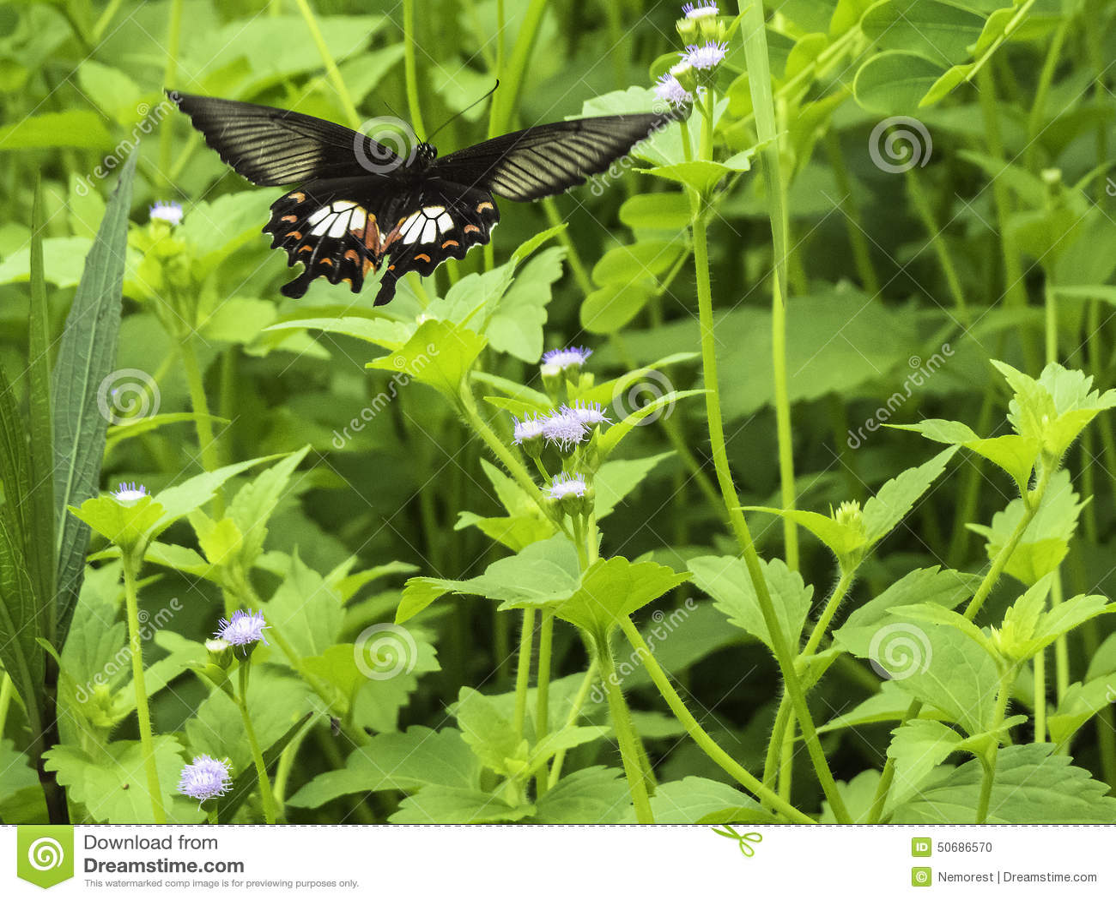 Download 蝴蝶 库存照片. 图片 包括有 本质, 宏指令, 昆虫学, 特写镜头, 蝴蝶, 热带, 茴香, beautifuler - 50686570