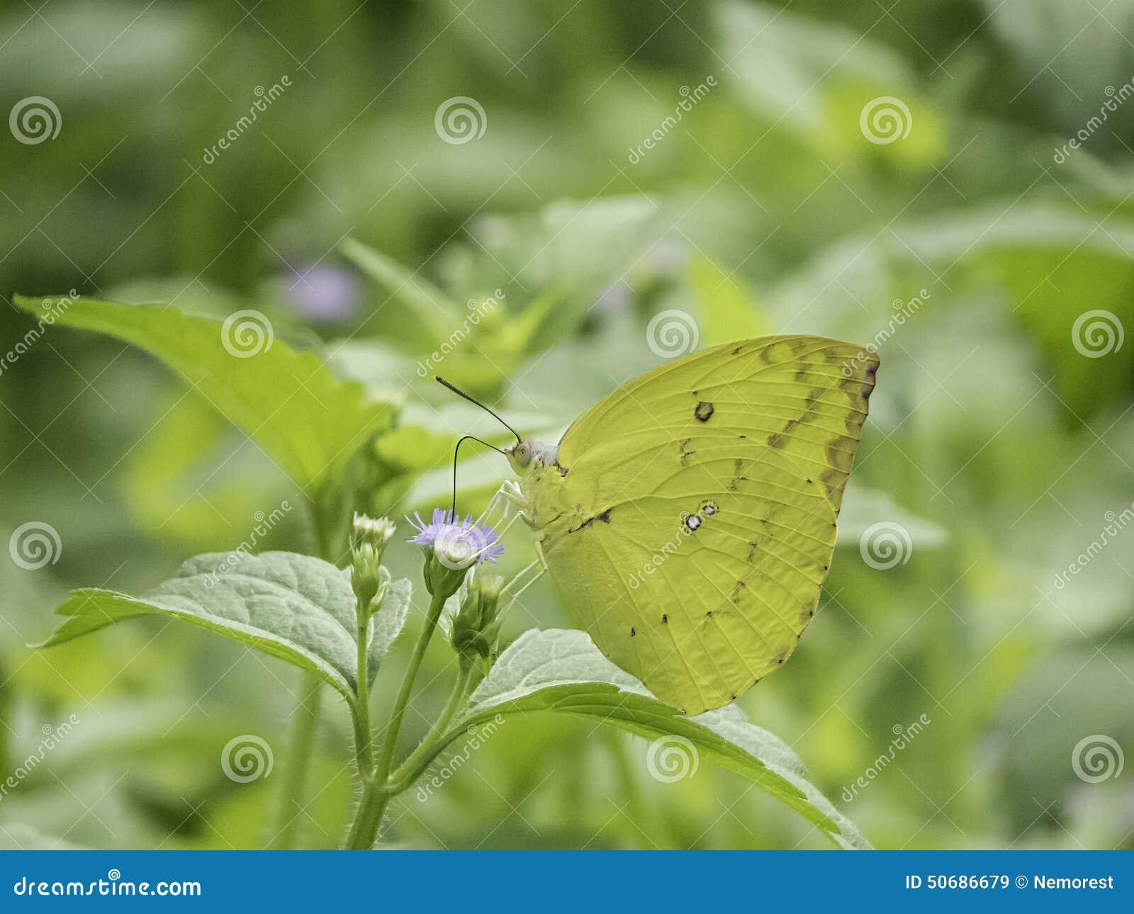 Download 蝴蝶 库存图片. 图片 包括有 放大, 热带, 昆虫, 本质, 飞行, 野生生物, 茴香, 昆虫学, 扩大化 - 50686679