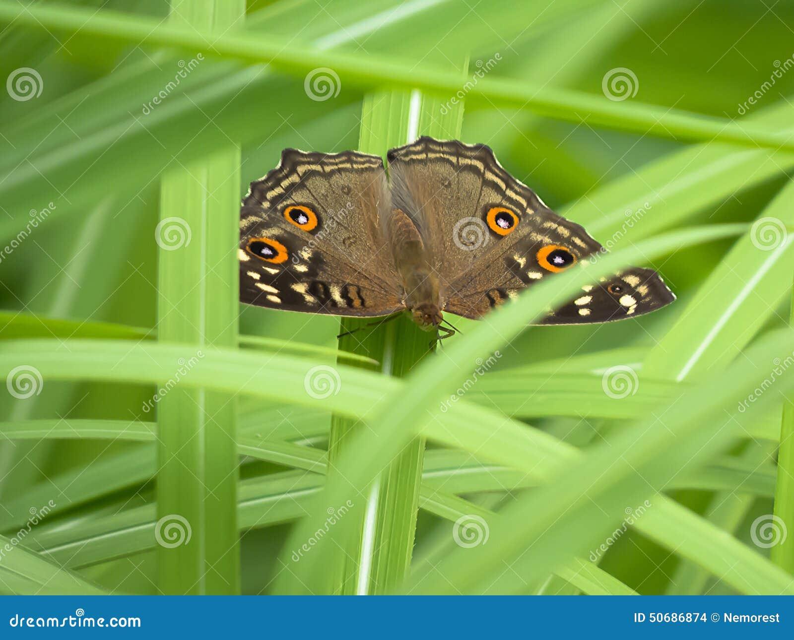 Download 蝴蝶 库存照片. 图片 包括有 特写镜头, 扩大化, 昆虫, 宏指令, 野生生物, 飞行, 正横, 农村 - 50686874