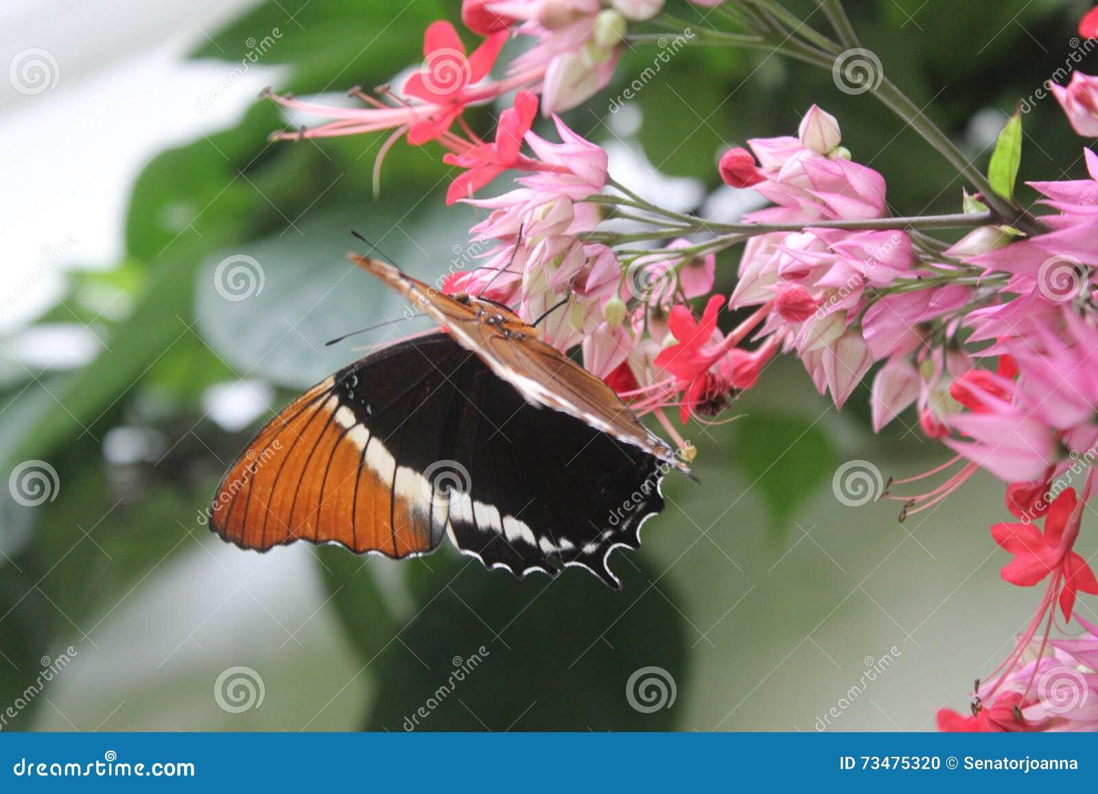蝴蝶在蝴蝶的庭院里