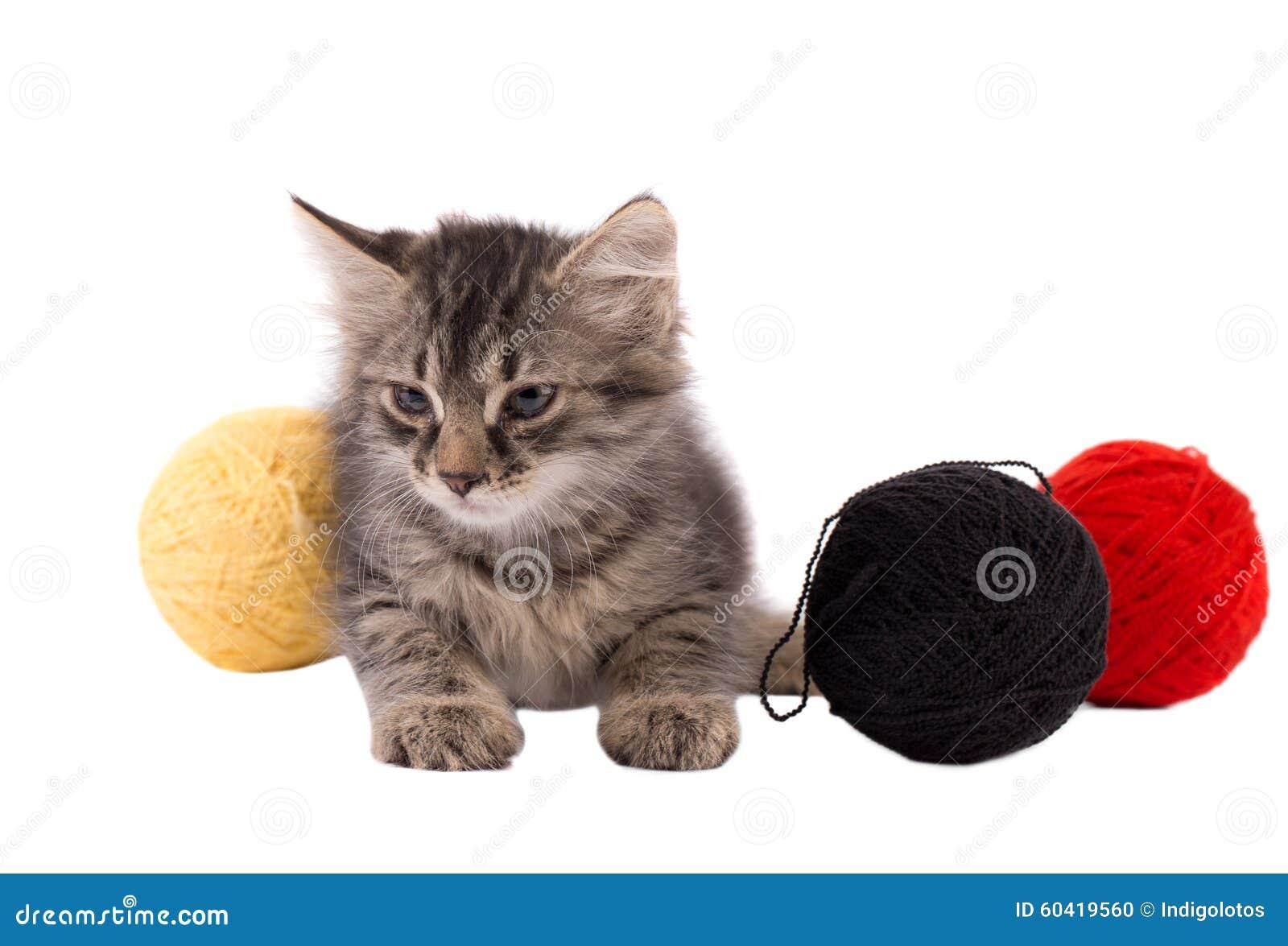 螺纹滑稽的棕色小猫和球