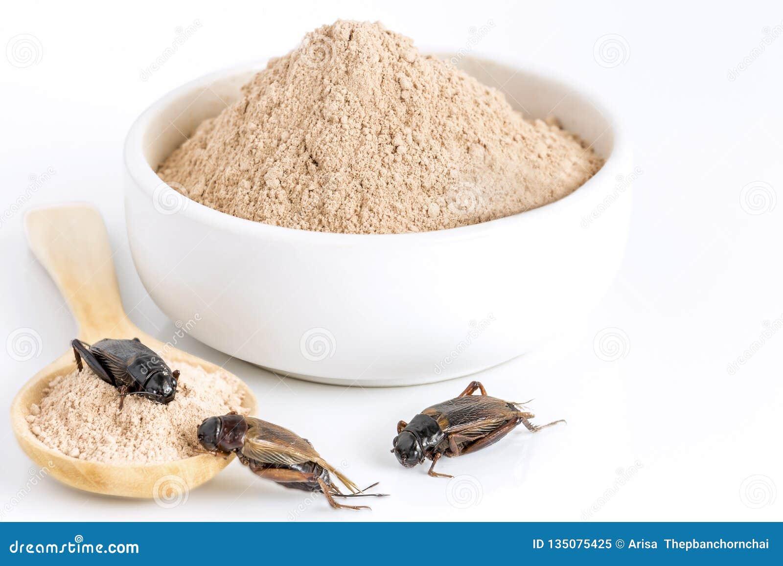 蟋蟀吃的粉末昆虫当食品项目由在碗的煮熟的昆虫肉和木匙子制成在白色背景是好