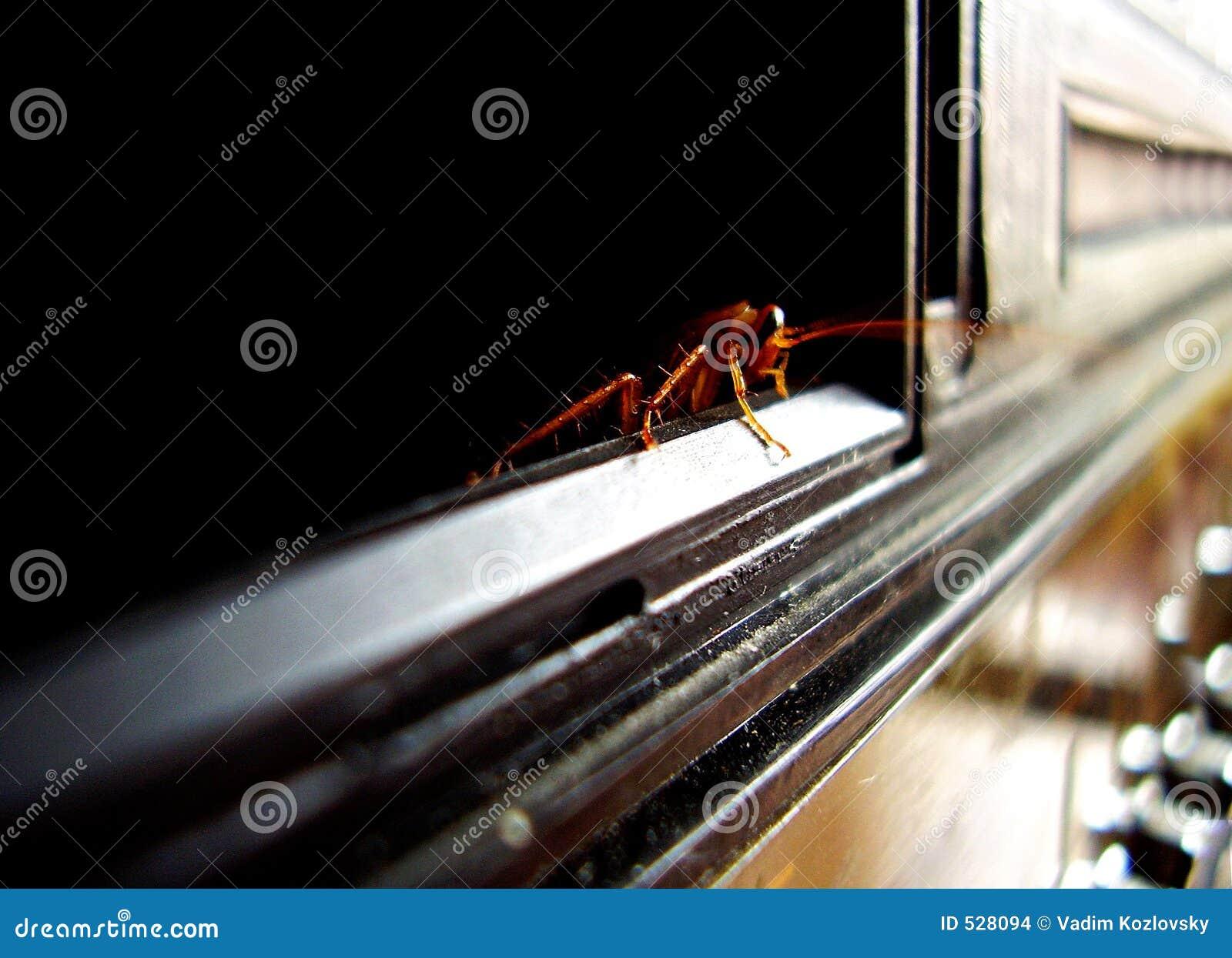 Download 蟑螂 库存照片. 图片 包括有 蟑螂, 恐怖, 污秽, 气味, 昆虫, 天线, 污染, 本质 - 528094