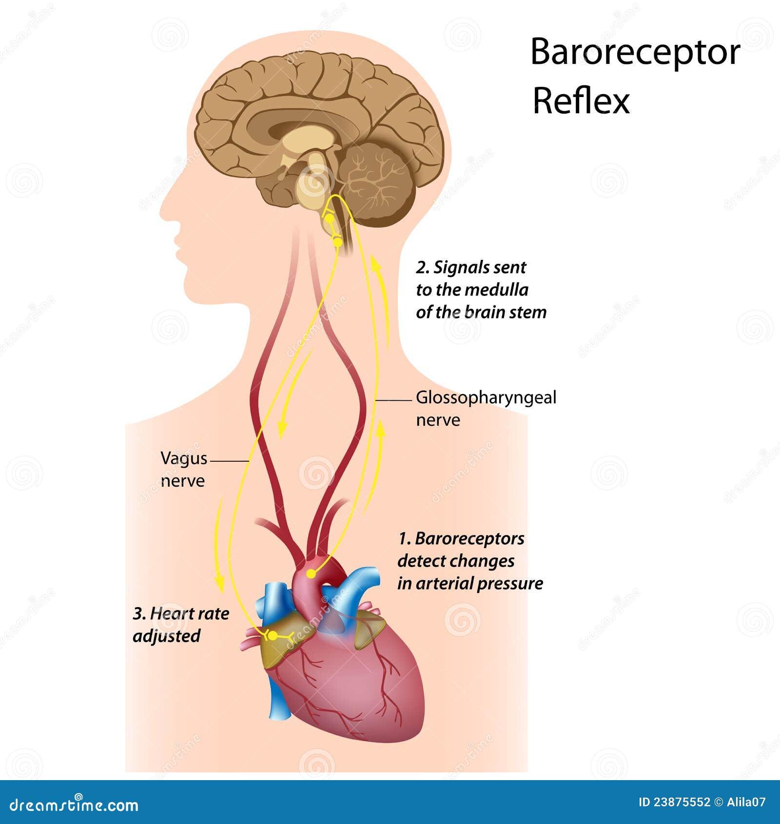血压管理规定