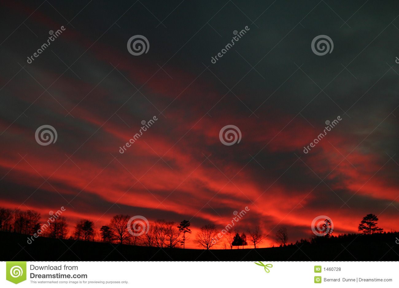 血液斑纹日落