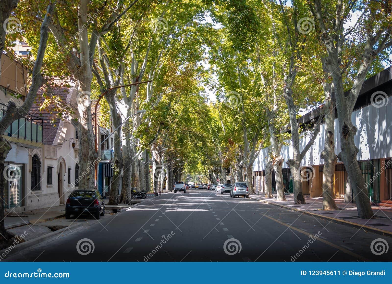 街道在街市Mendoza - Mendoza,阿根廷