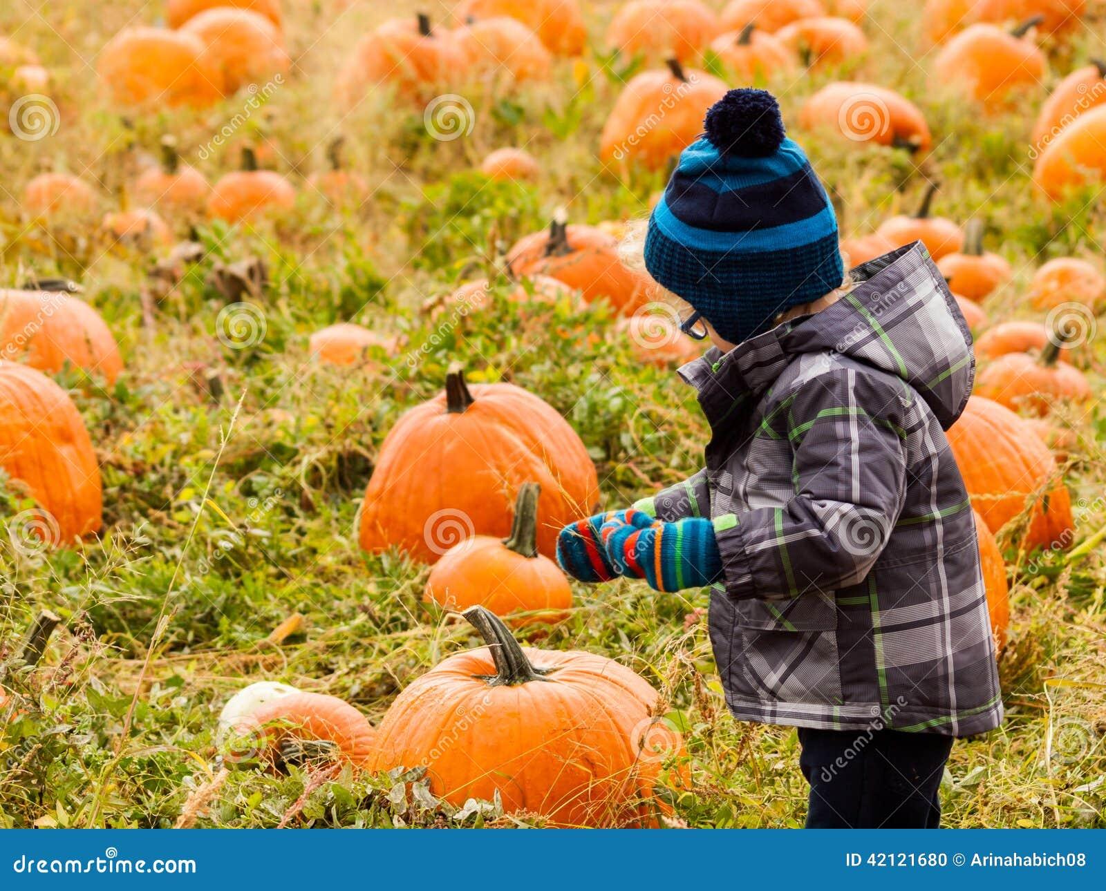 采摘南瓜在早期的秋天 2012年南瓜在四英里历史公园,丹佛的收获节日.