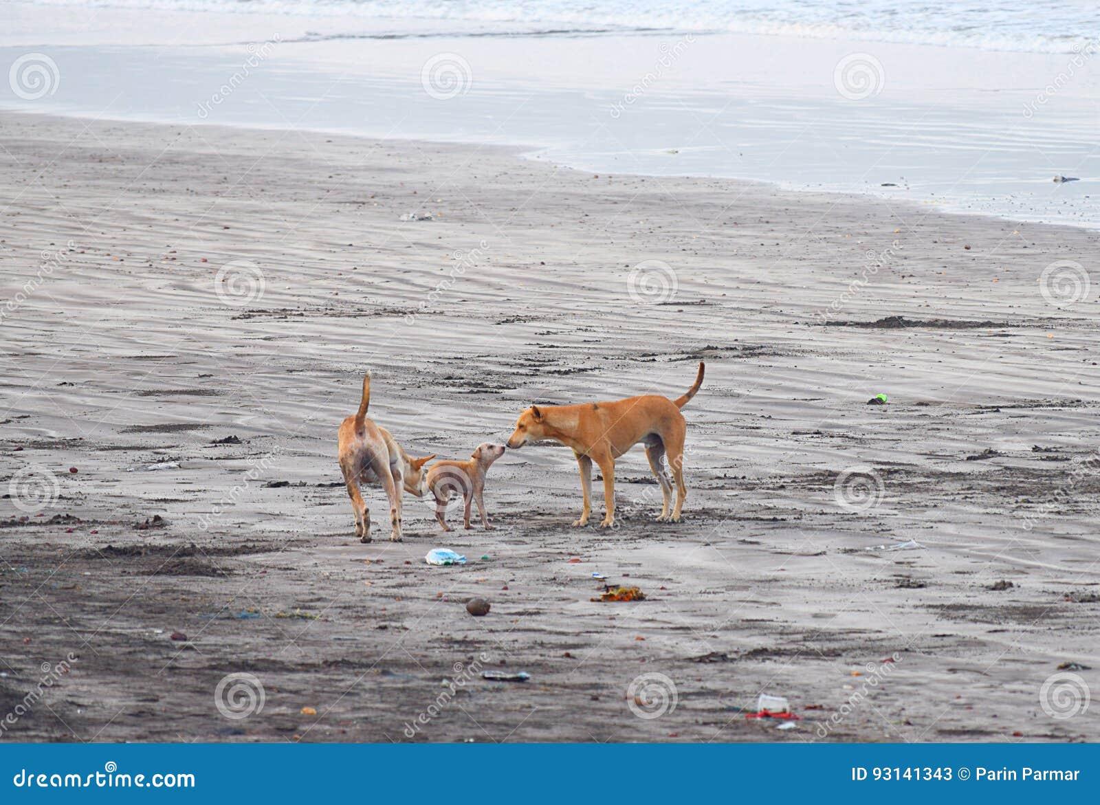 表现出的犬科在海滩的爱