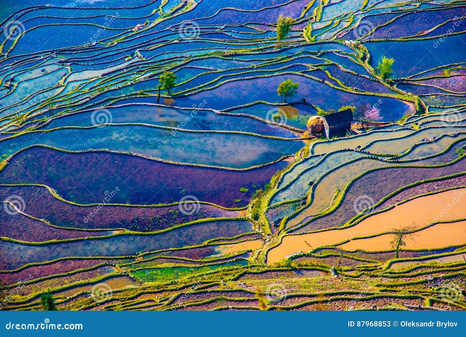 被充斥的米领域在中国南方
