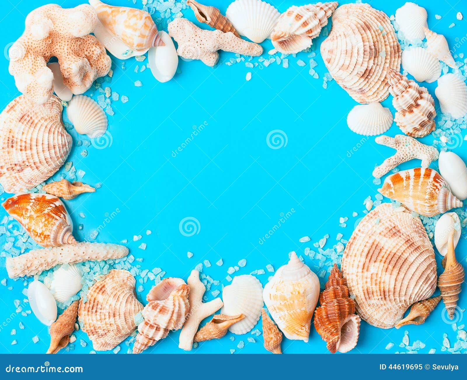从被分类的贝壳和珊瑚的框架在蓝色背景