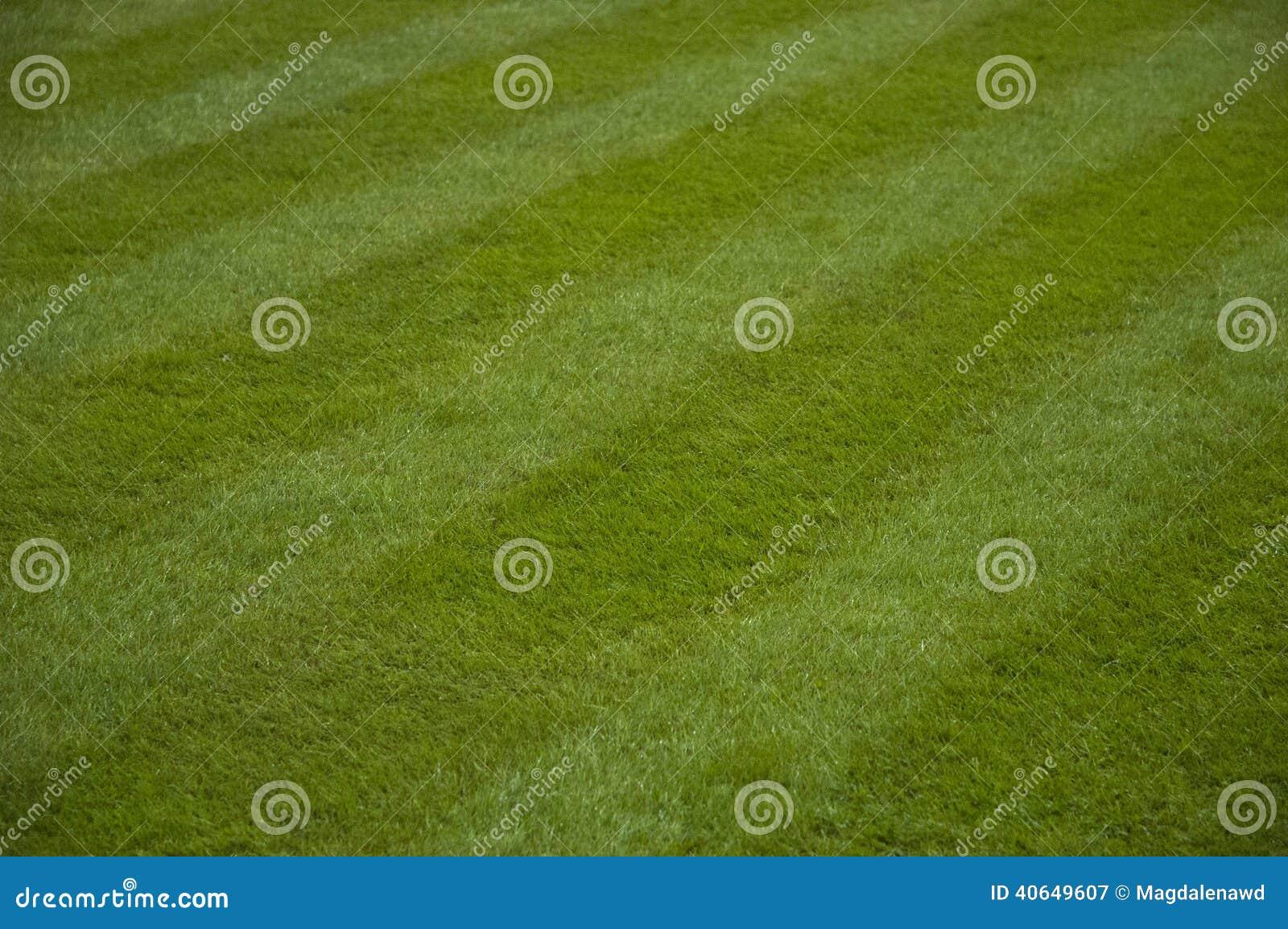 被割的草坪